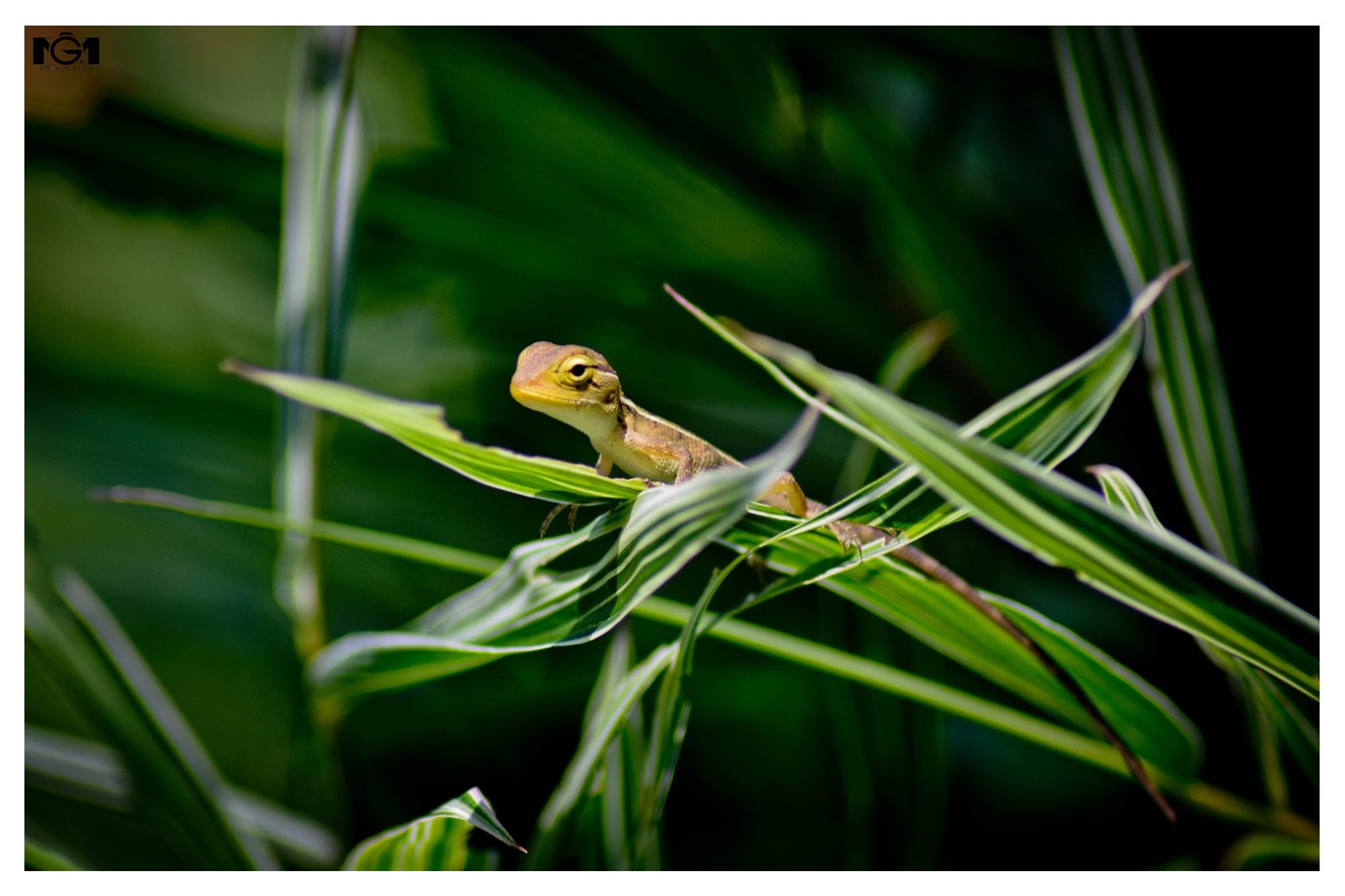 Wildlyf photography by Midhun Ganesh