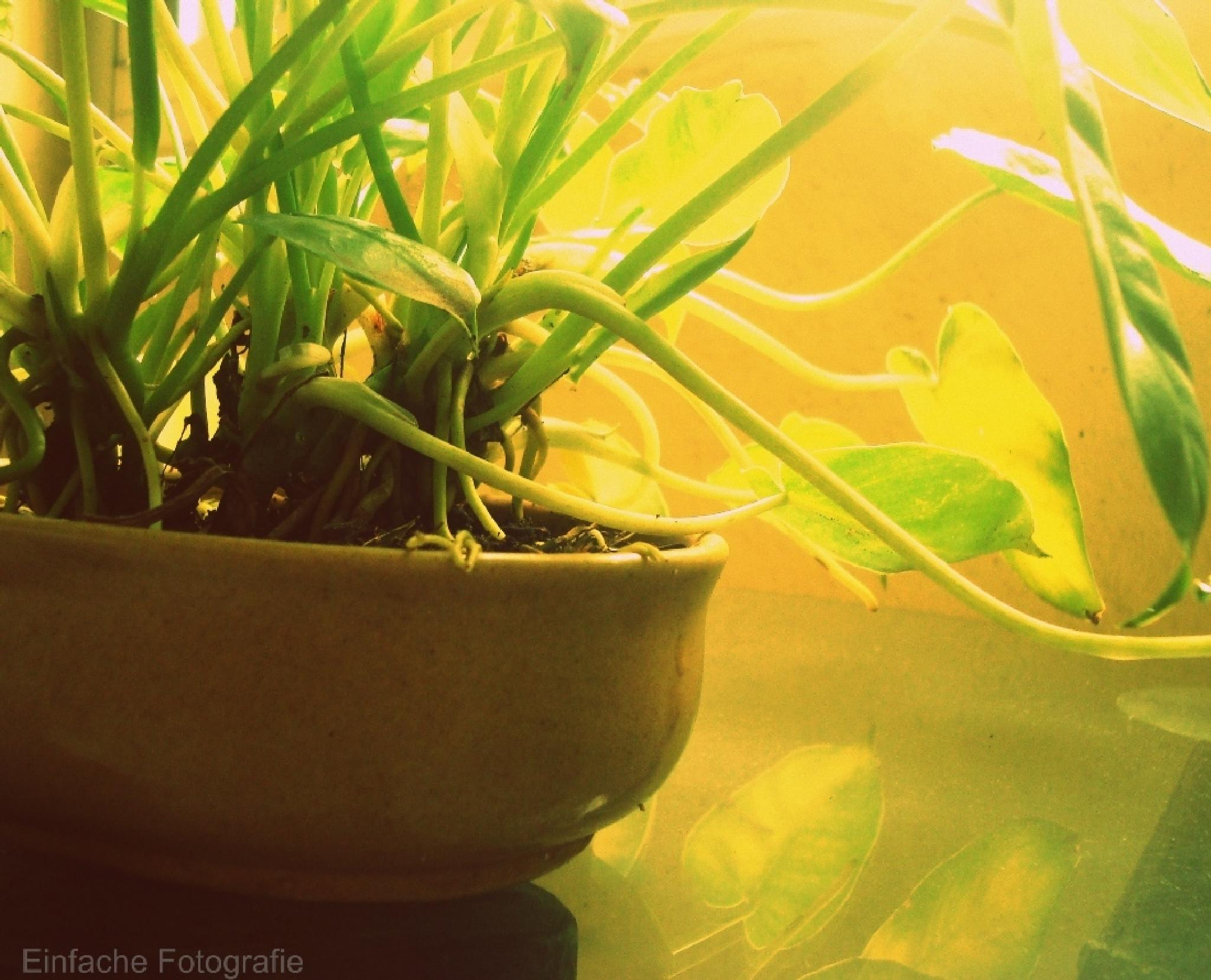 A Green vision.  by joemathew