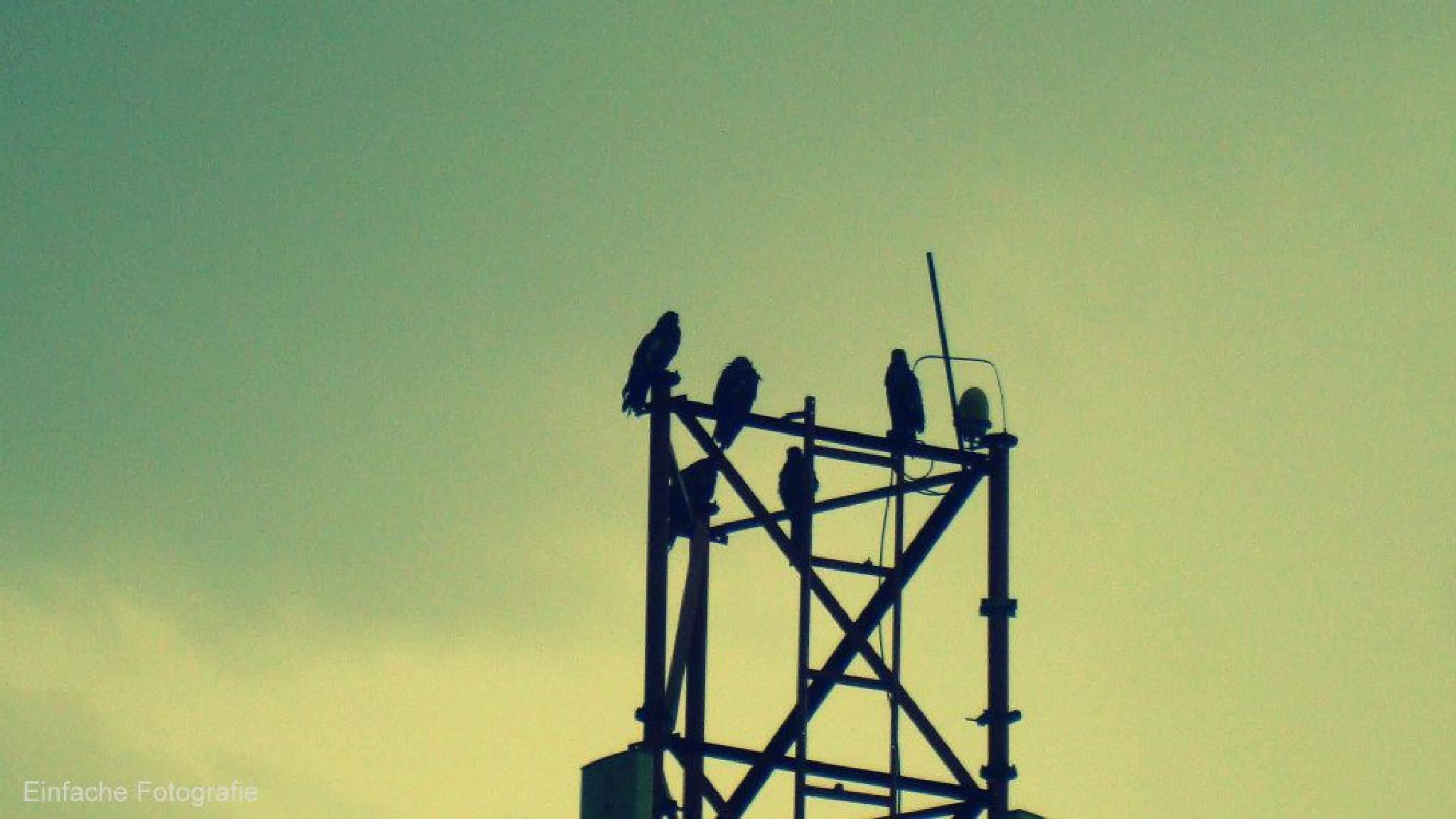 Thugs of the sky.. by joemathew