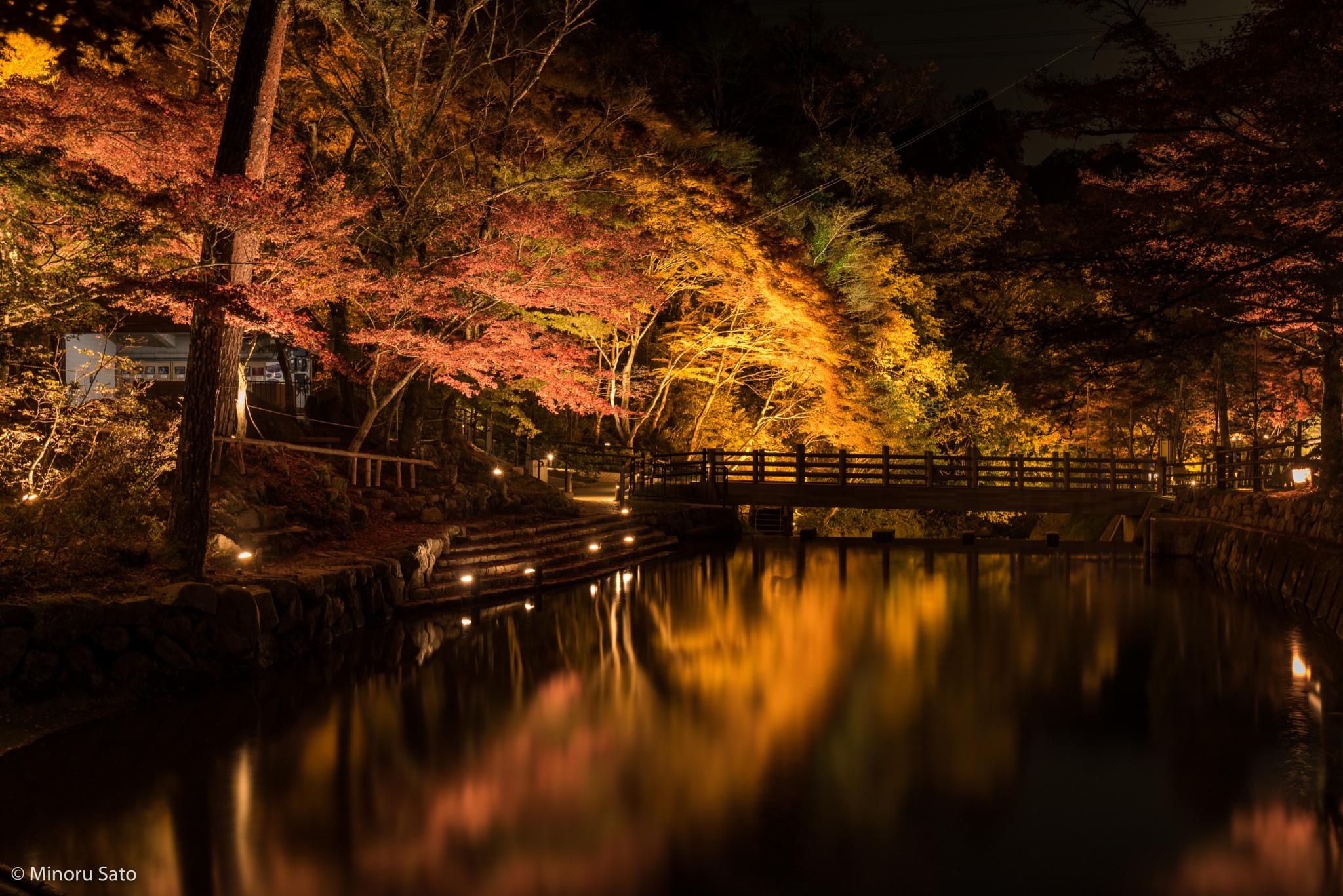 Iwayado Park Autumn LightUp - Seto city, Aichi by Minoru Sato