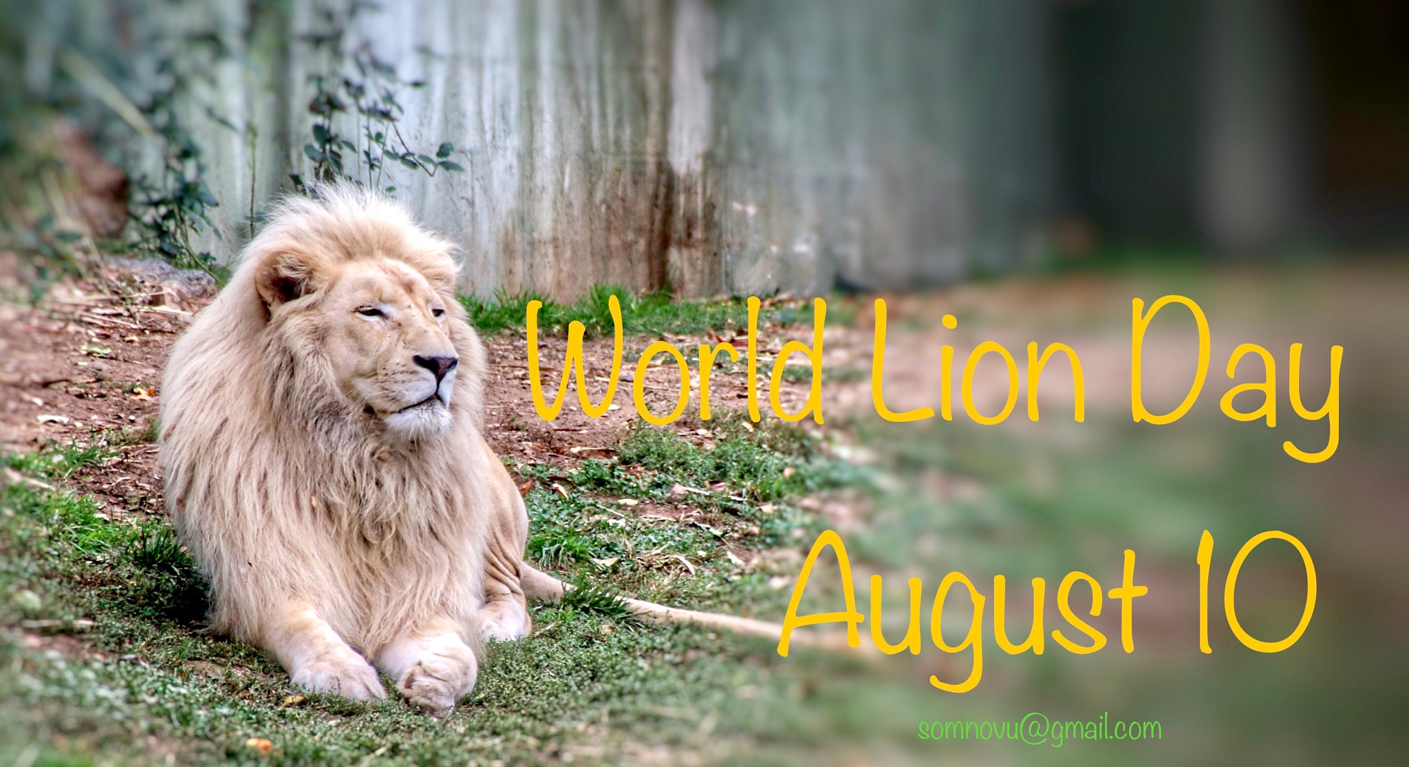 The Lions Pride by Sonam Norbu