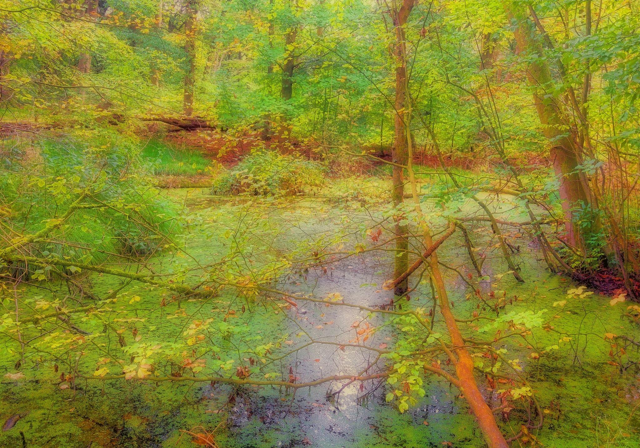 The Autumn Casanova 2 by darronshome