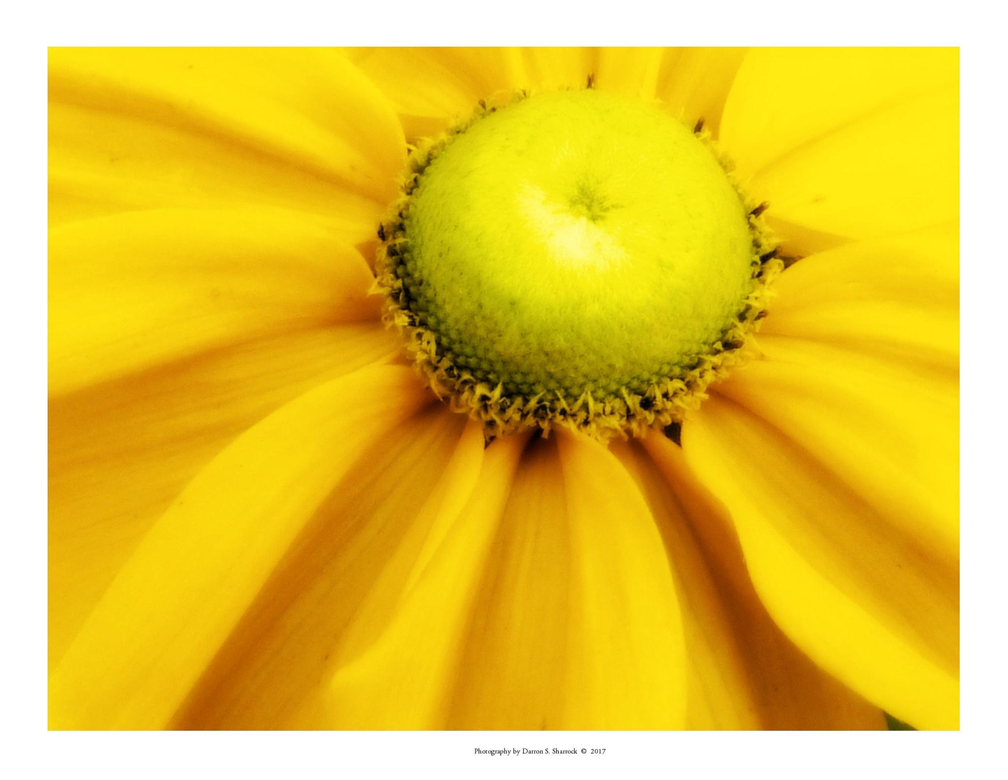 Sunshine by darronshome