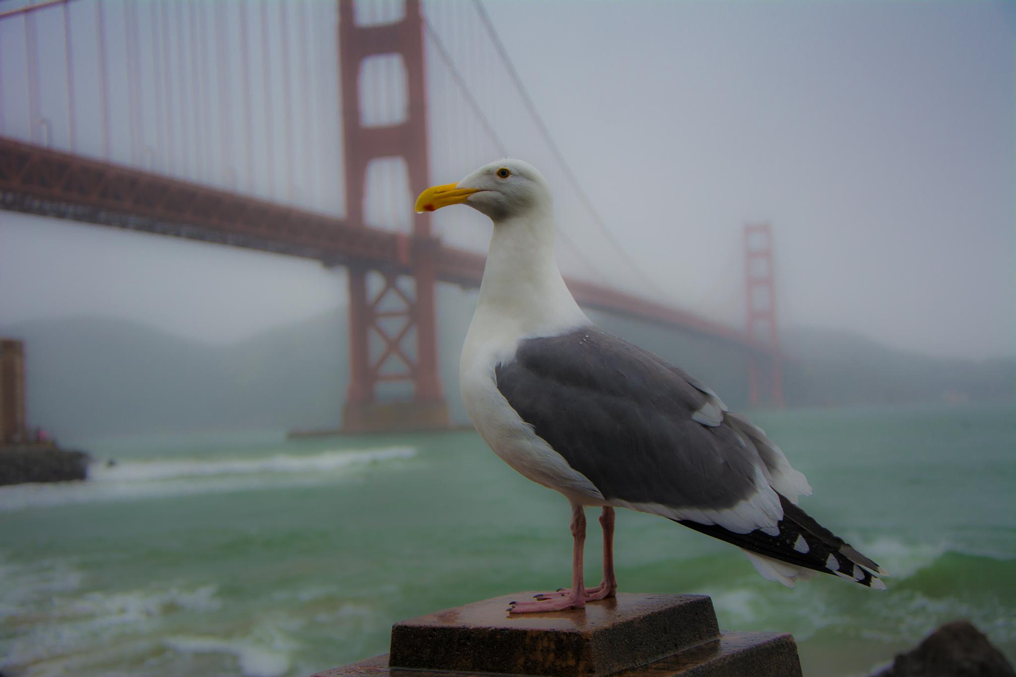 Silly Seagull by Nate Eckler Photography