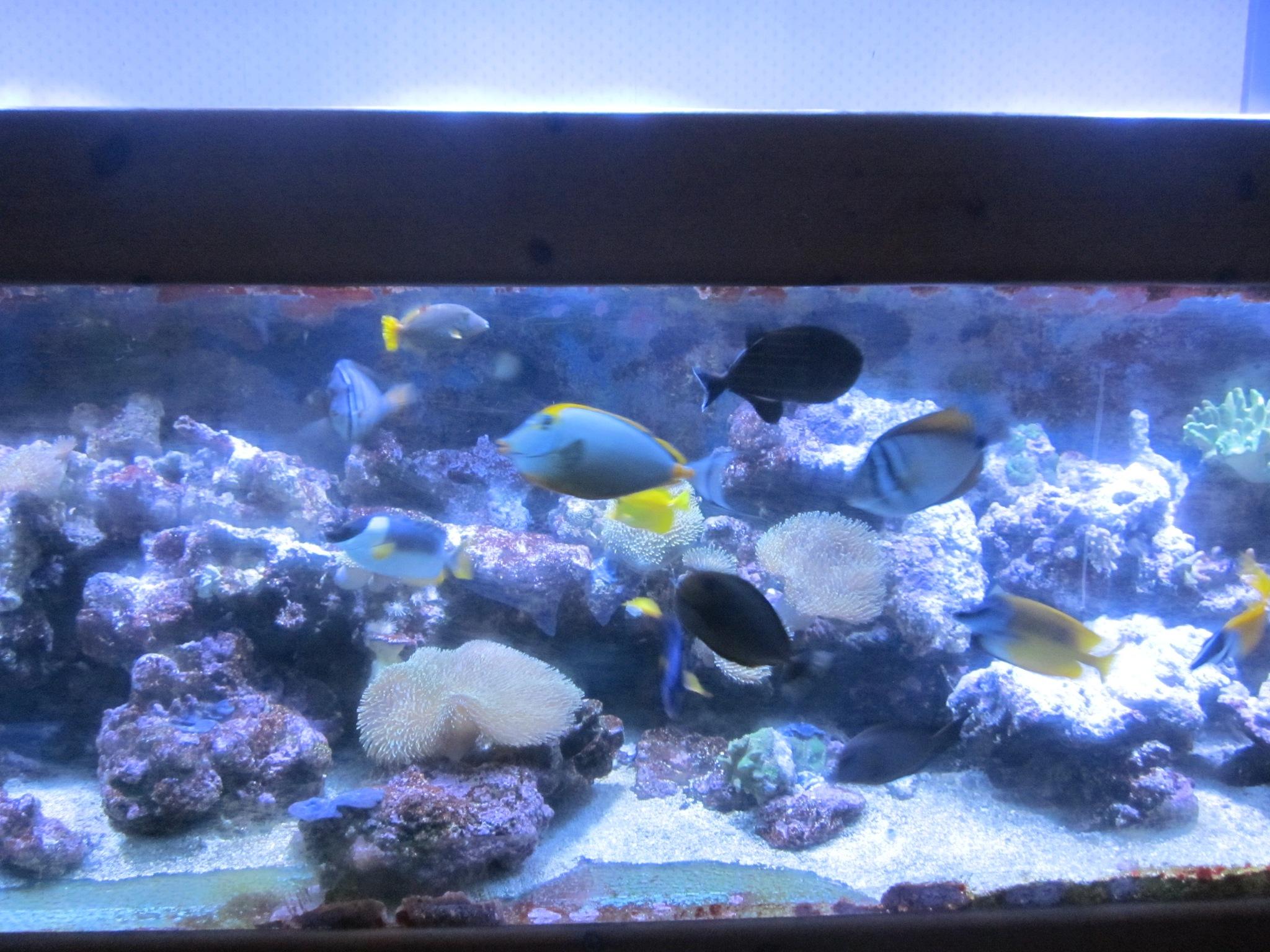 marine fish by lindab