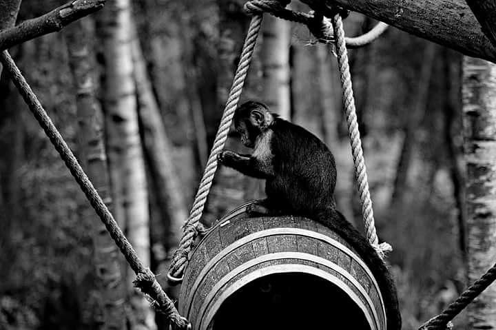 sad monkey by Sjoerd Zwaan