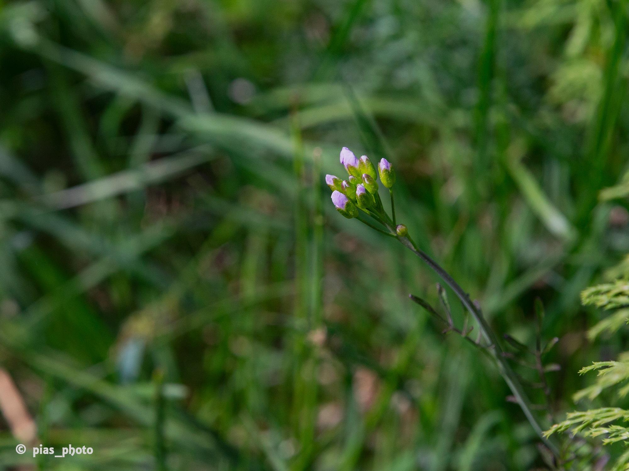 Knoppar by pias_photo