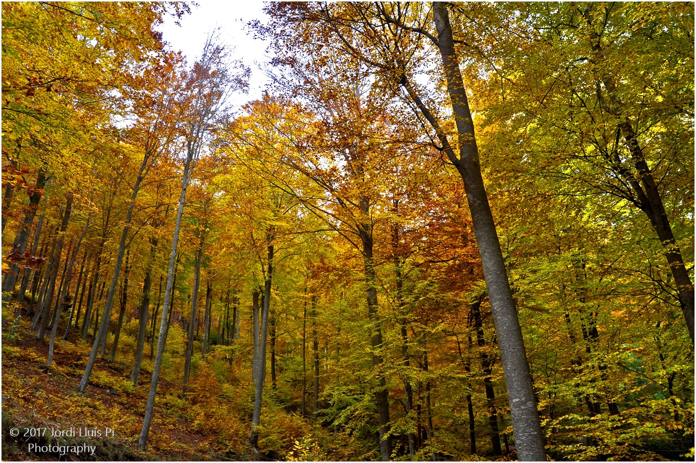 Autumn in the forest by Jordi Lluis Pi