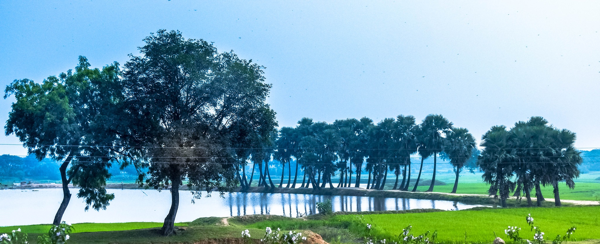 Pond by Kumar Munna