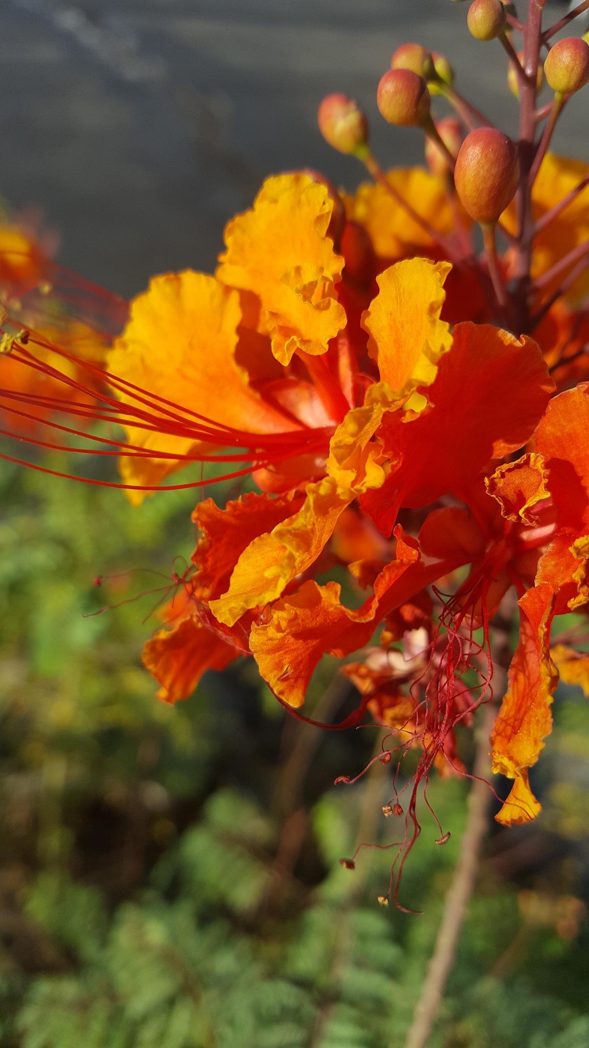 desert flower by Bobby Zimmerman