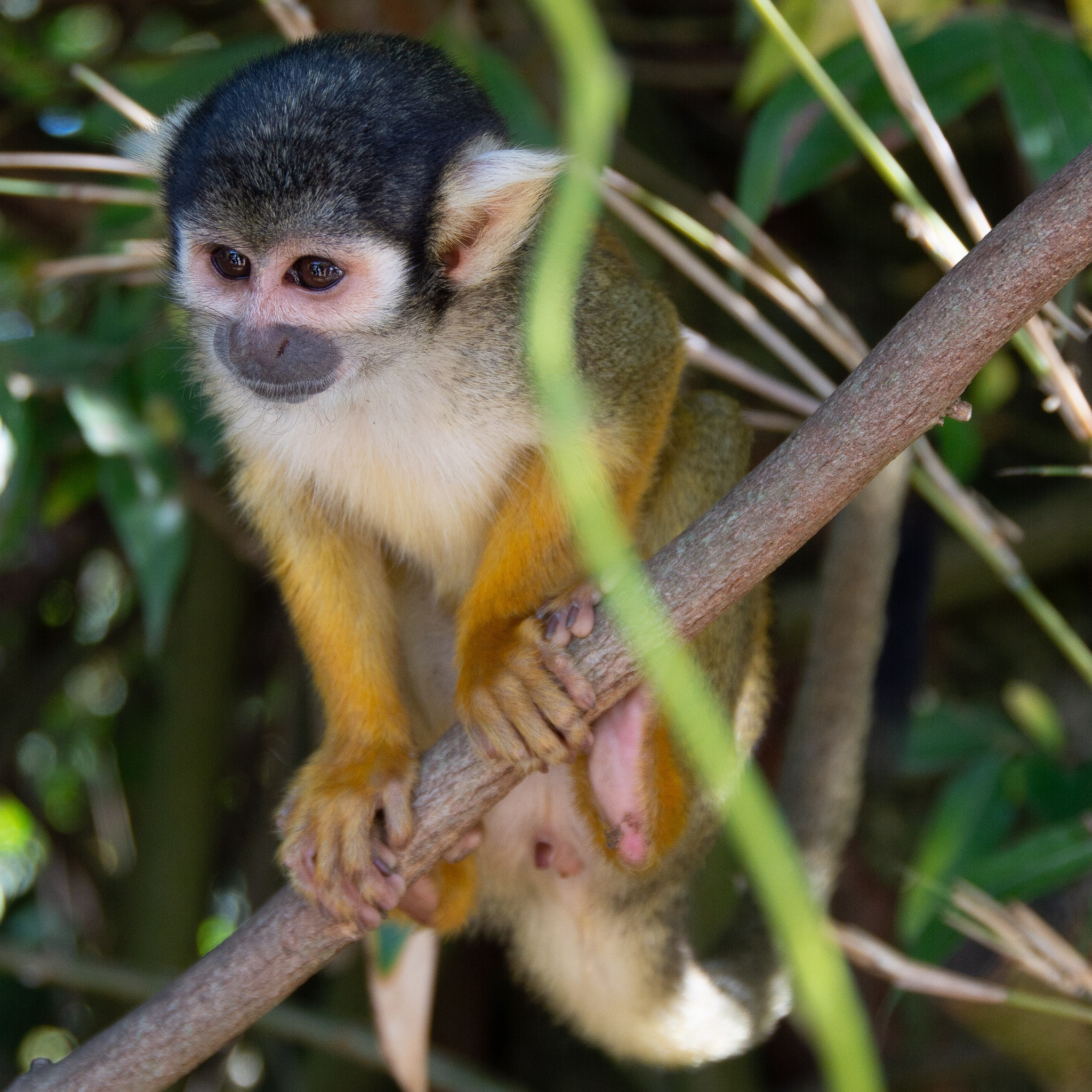 Monkey business by vancoilliefilip
