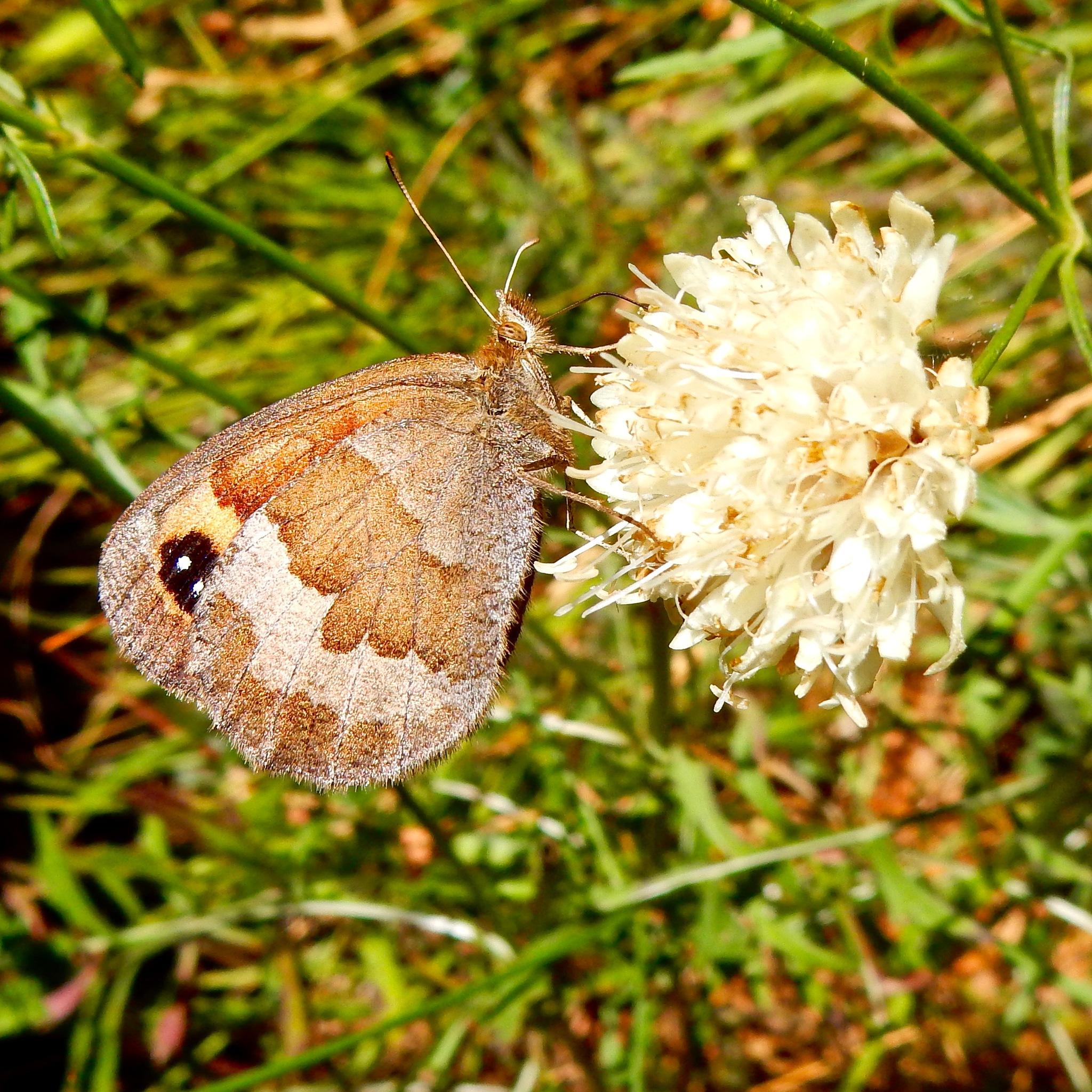Vlinder / Butterfly by Jitske Knol
