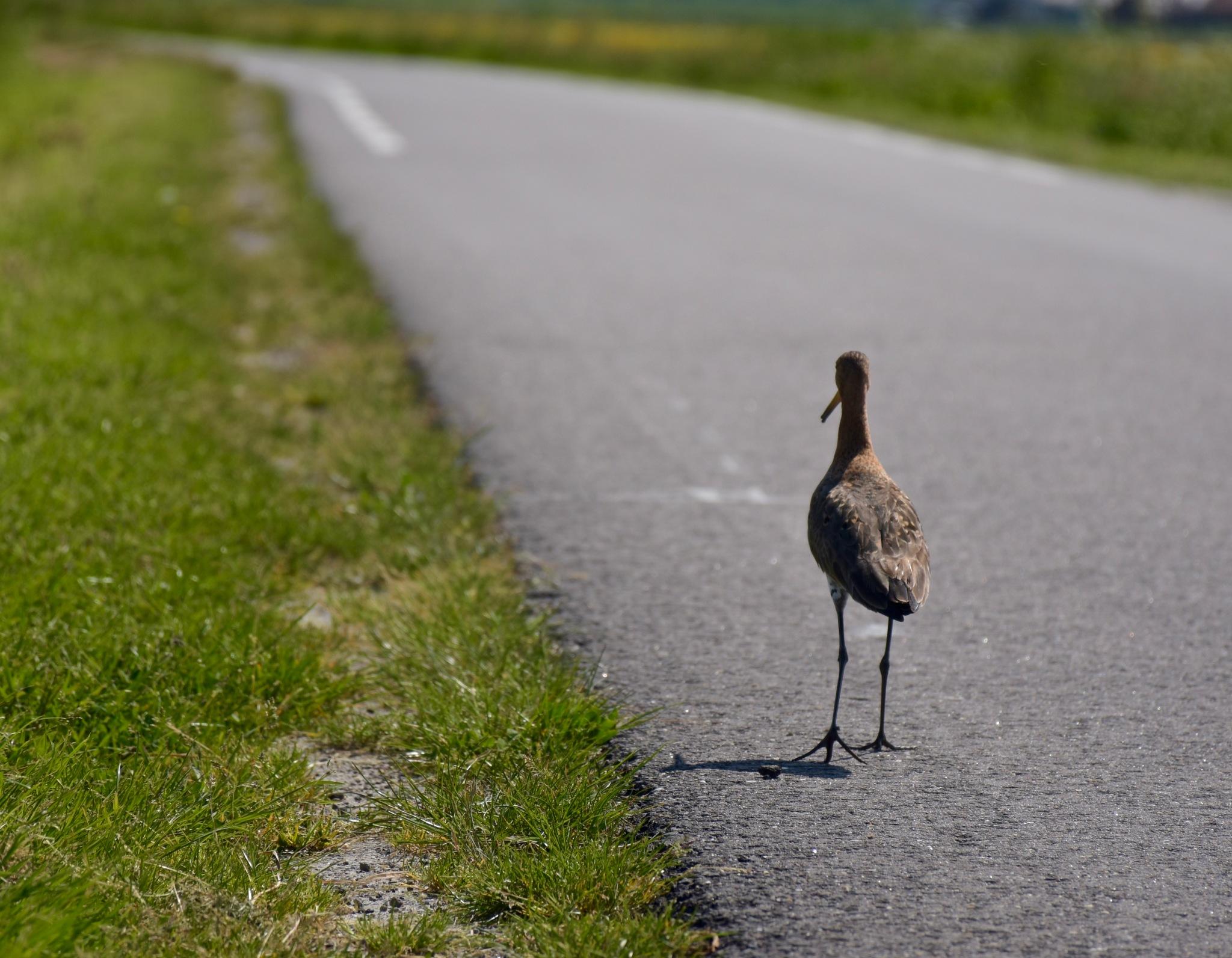 Eenzame wandelaar in Heerhugowaard by Jitske Knol