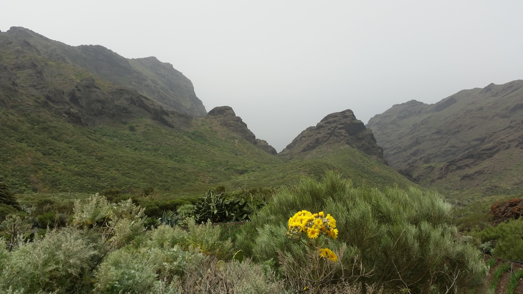 Tenerife  by Jitske Knol