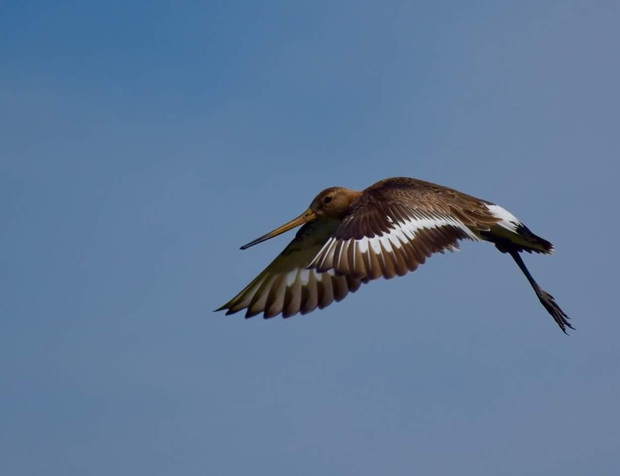 Gruto in de lucht by Jitske Knol