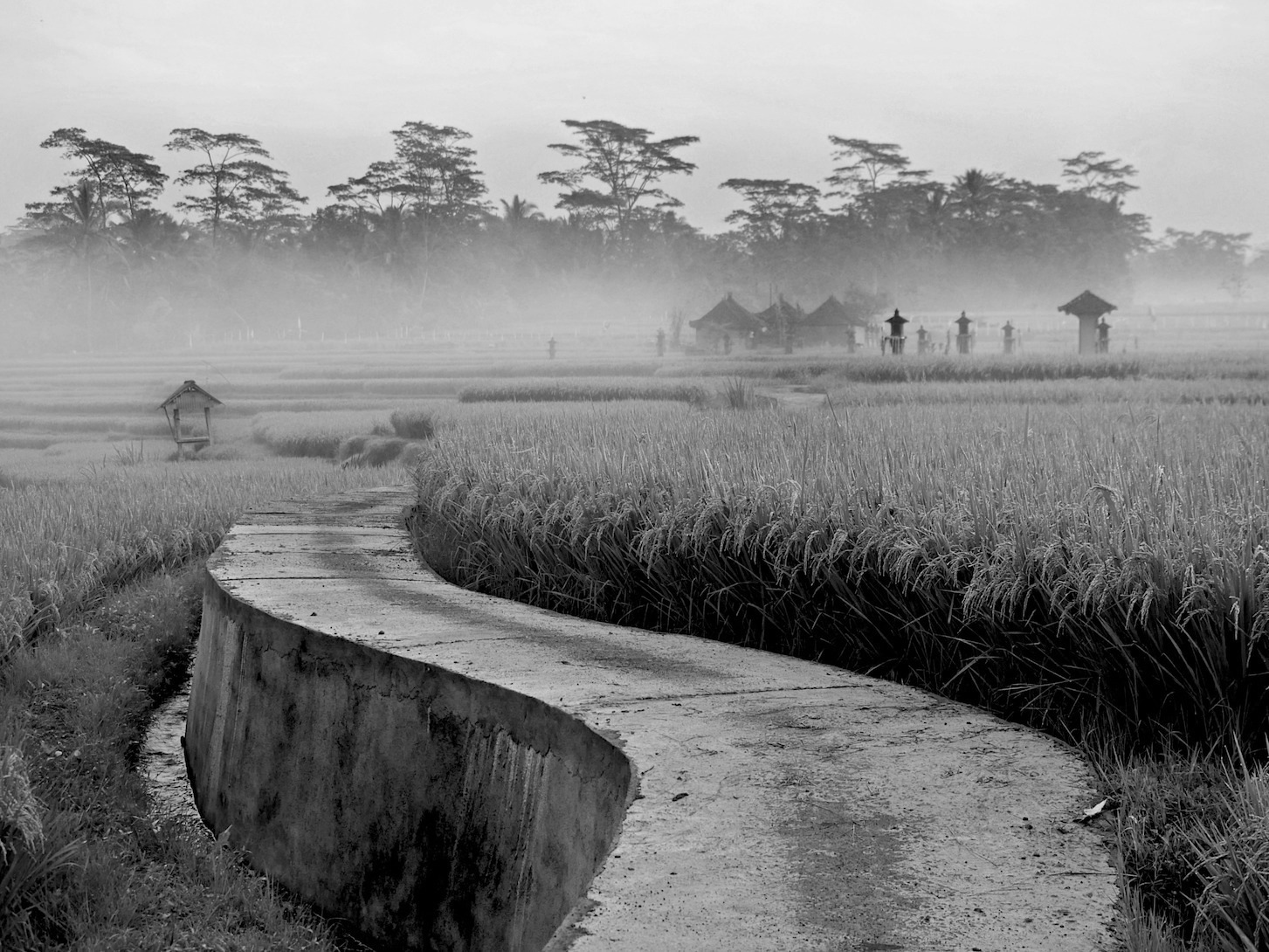 The track Into the Ricefeilds... by kevinmfairley