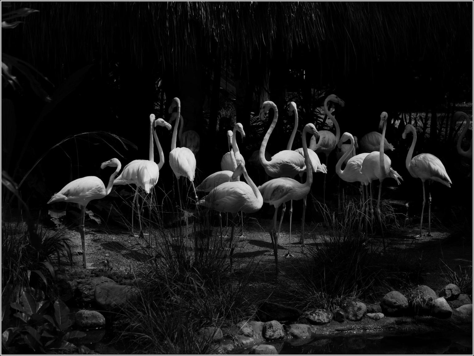 Birds in Bali 8 by kevinmfairley