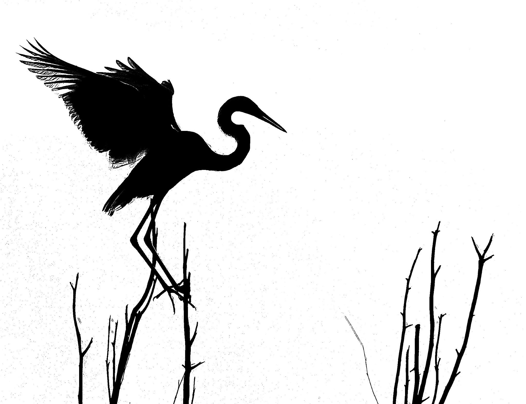 Heron. by kevinmfairley