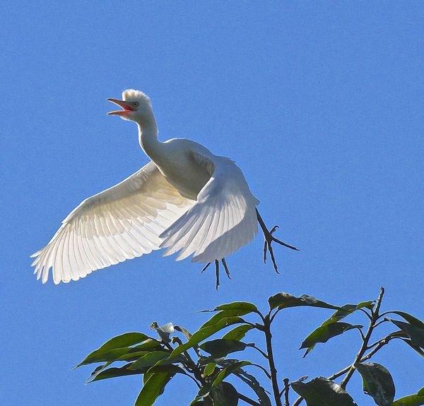 Heron  by kevinmfairley
