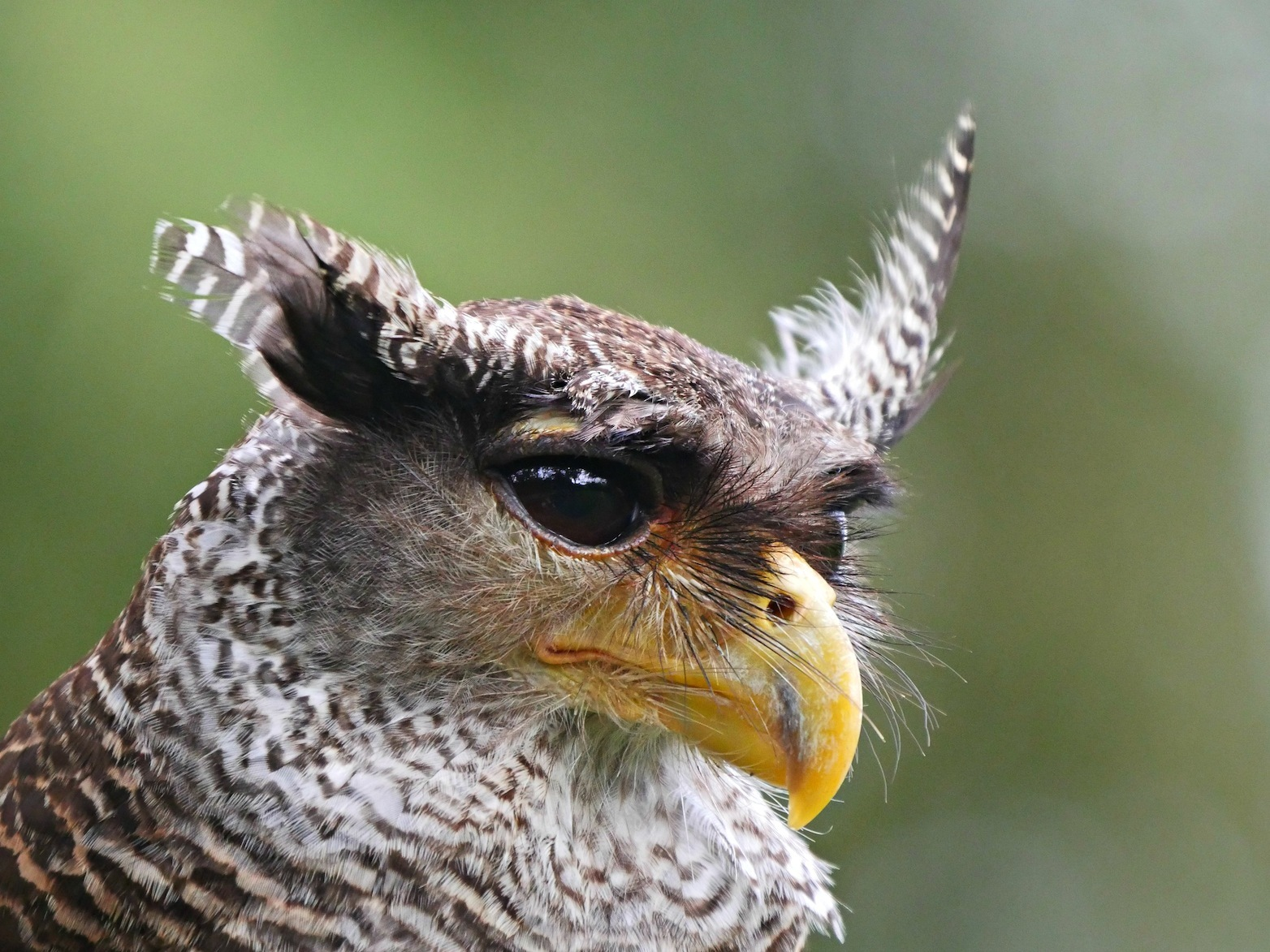 Birds i Bali 4 by kevinmfairley
