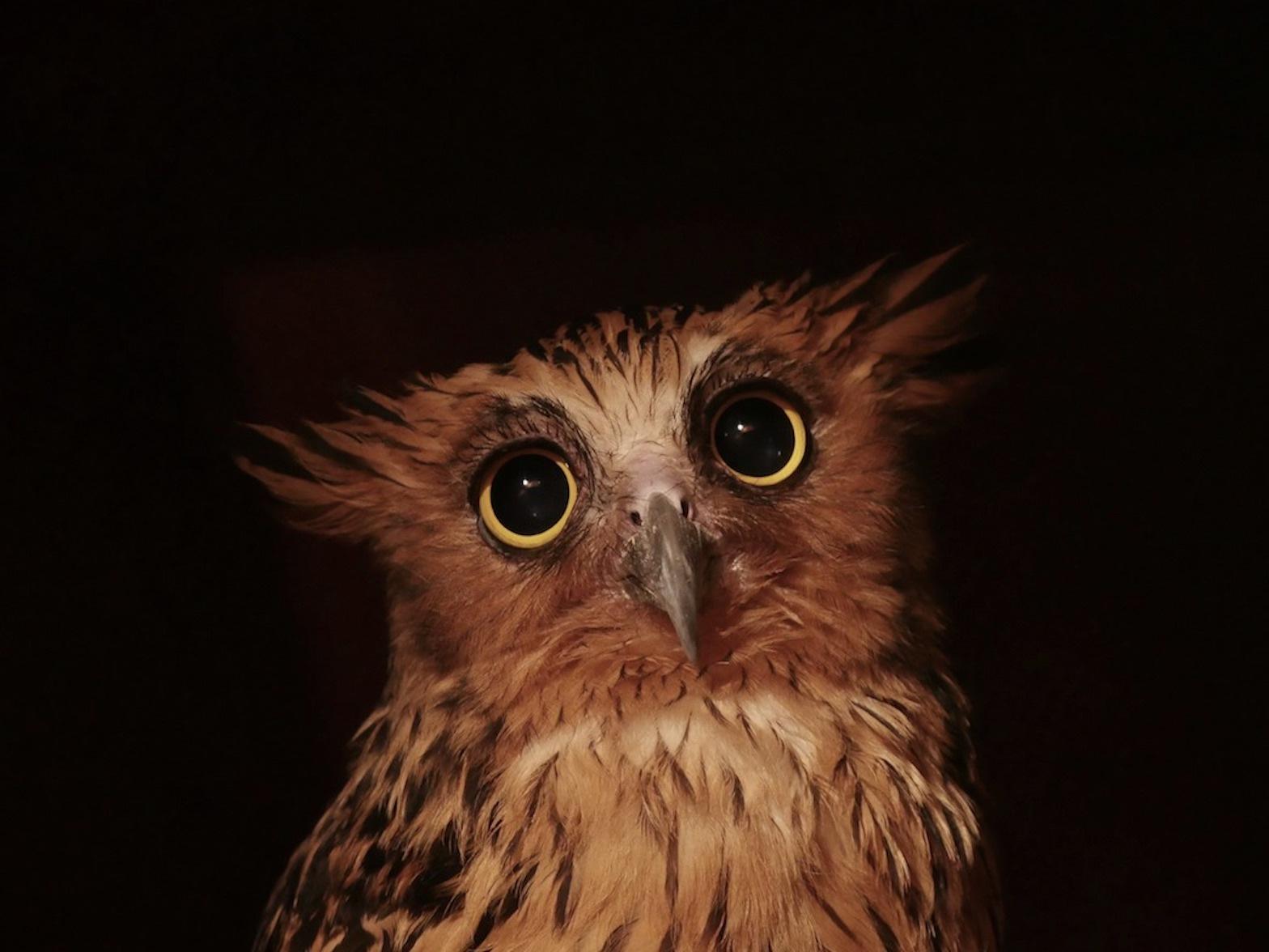 Owl.. by kevinmfairley