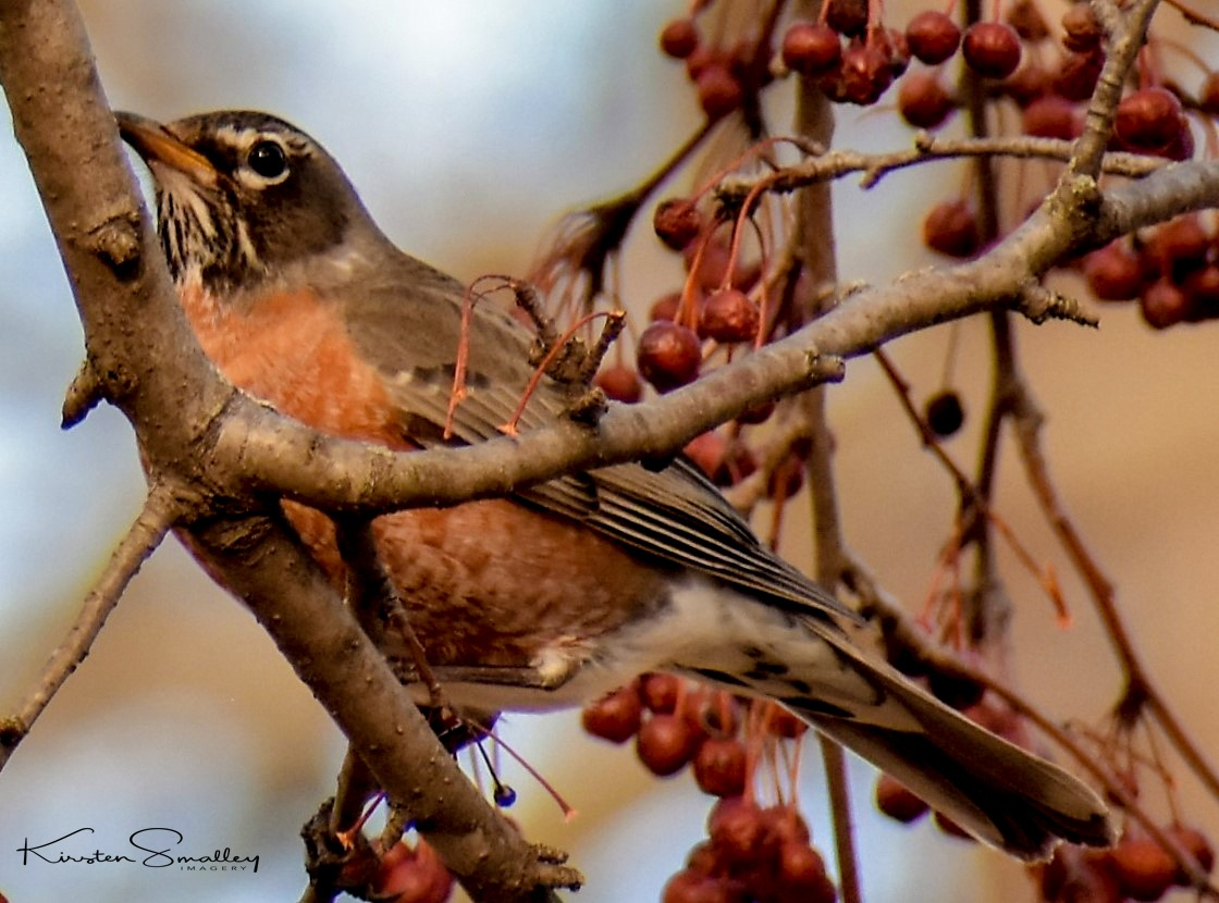 A Sign of Spring by Kirsten Smalley