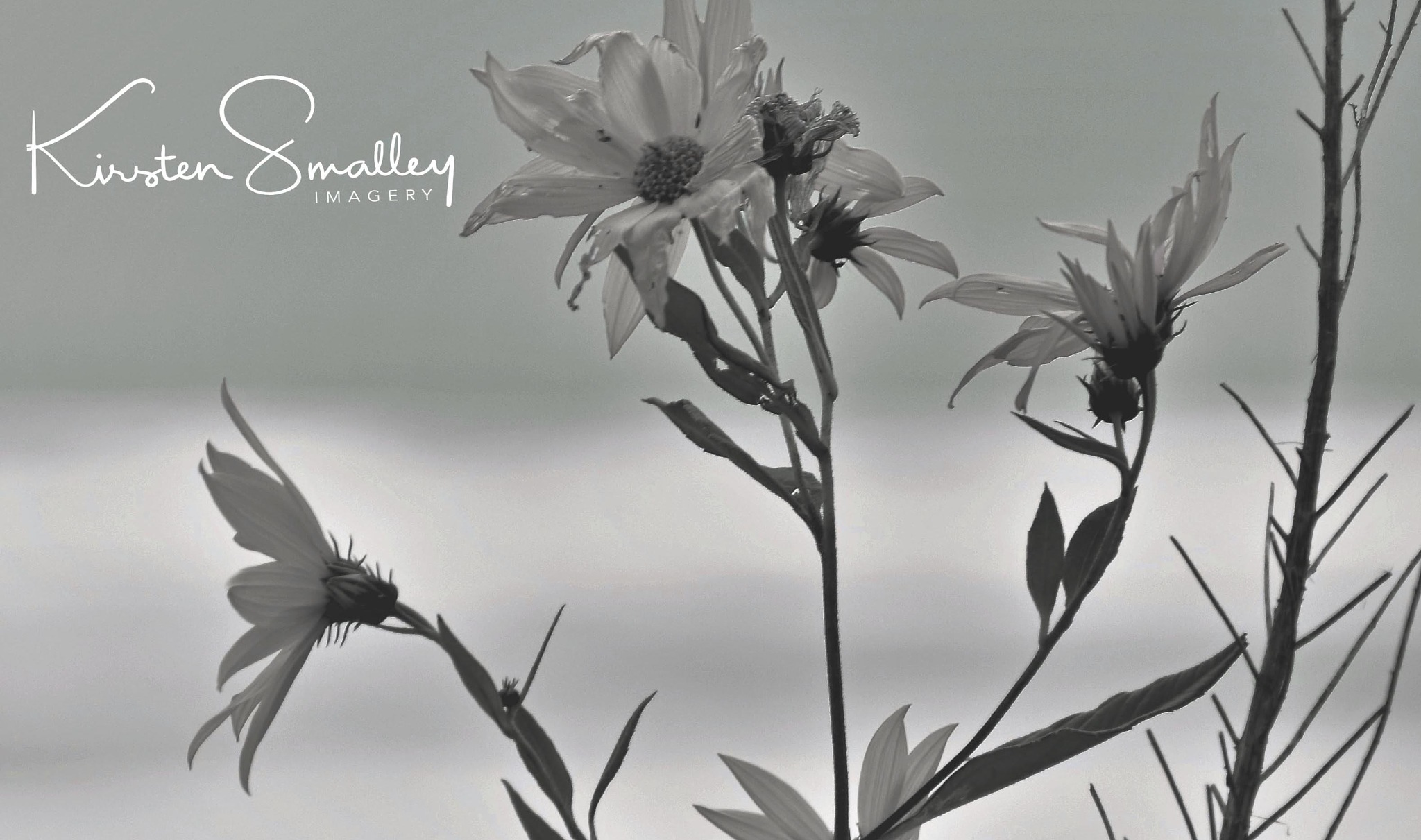 Wildflowers by Kirsten Smalley