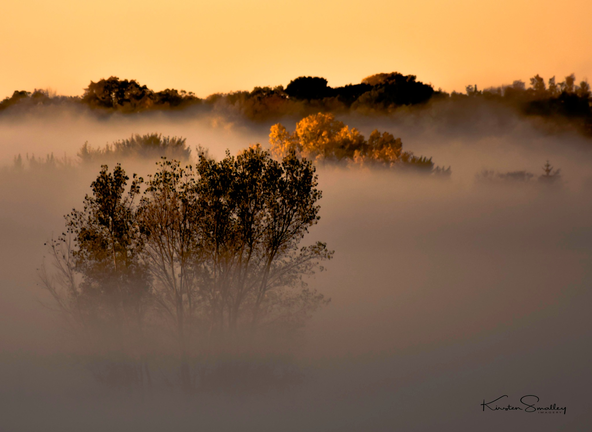 A Surreal Autum Misty Morning by Kirsten Smalley