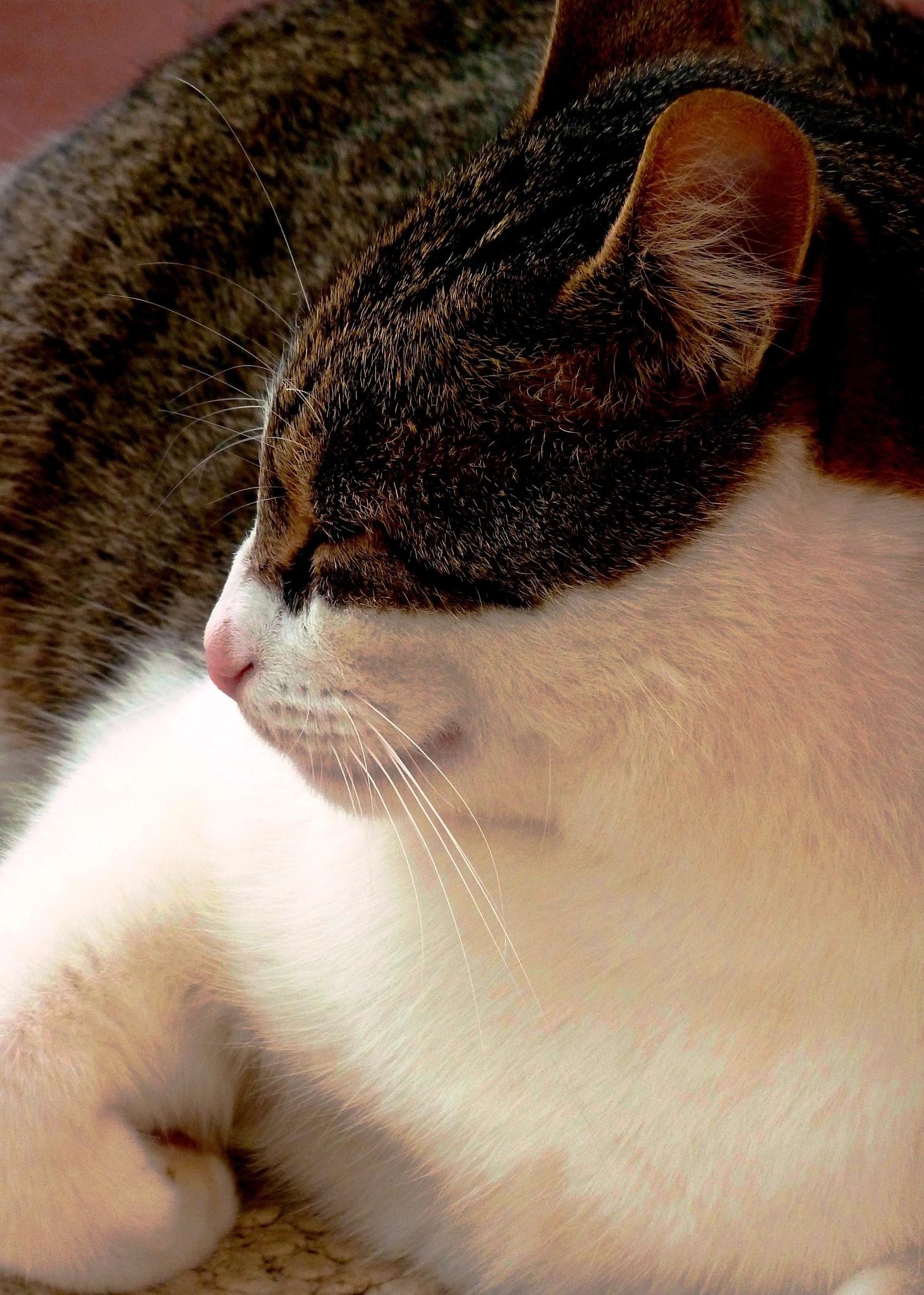 Rocco snoozing by Anton Agalbato