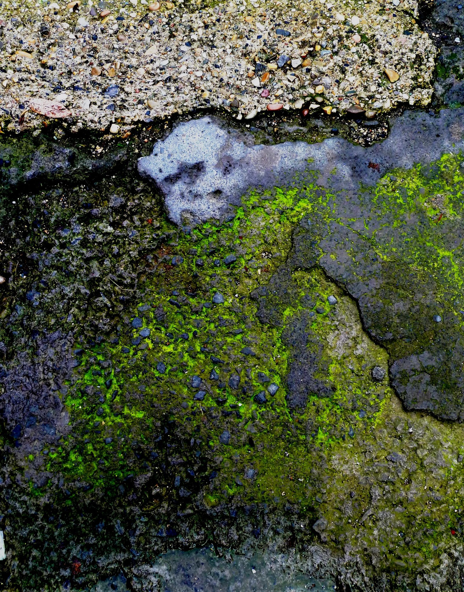 Wall simian in a stone forest.  Abstract. by Anton Agalbato