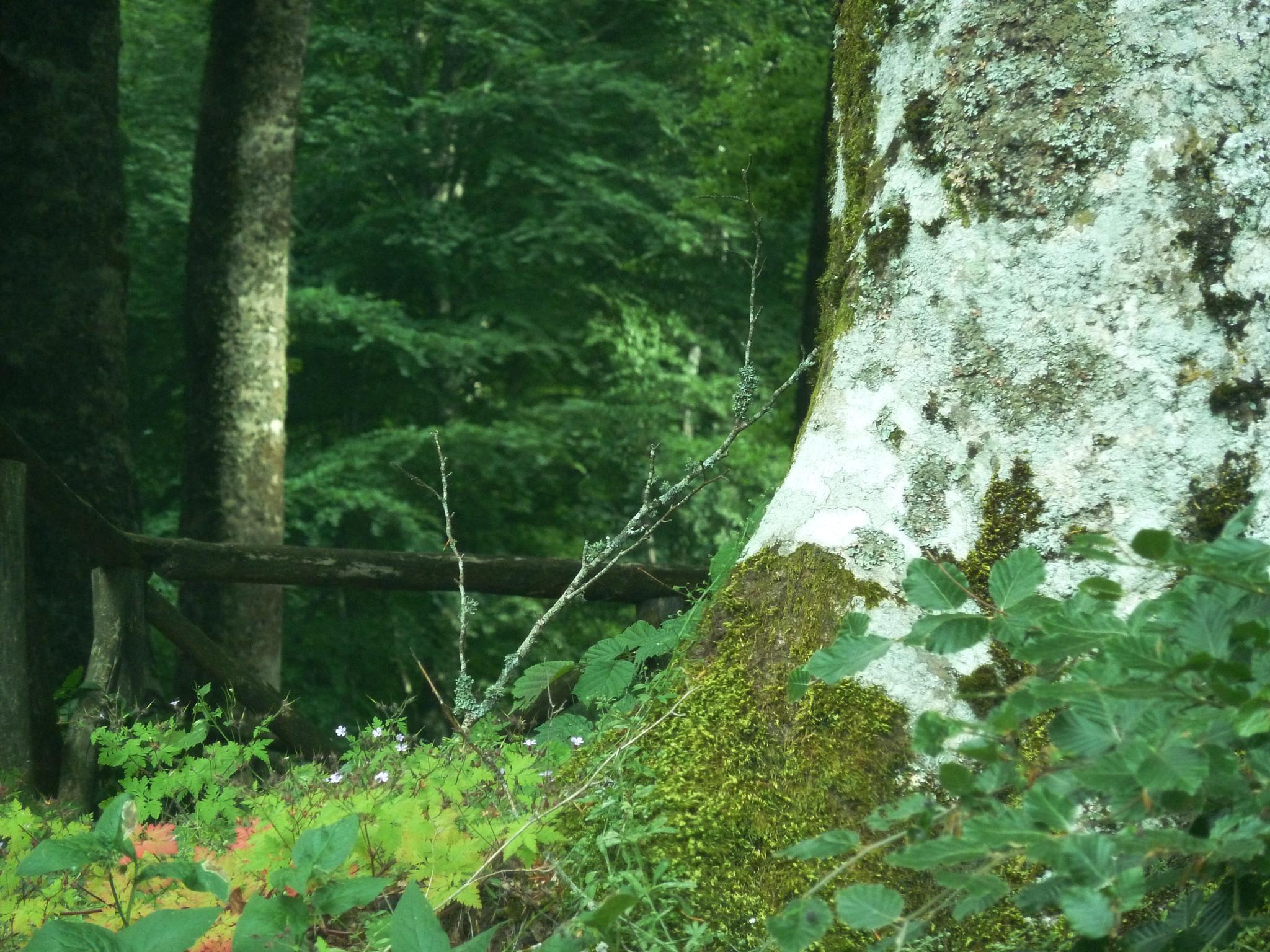 A walk in the woods.  La Faggetta, Monte Cimino. by Anton Agalbato