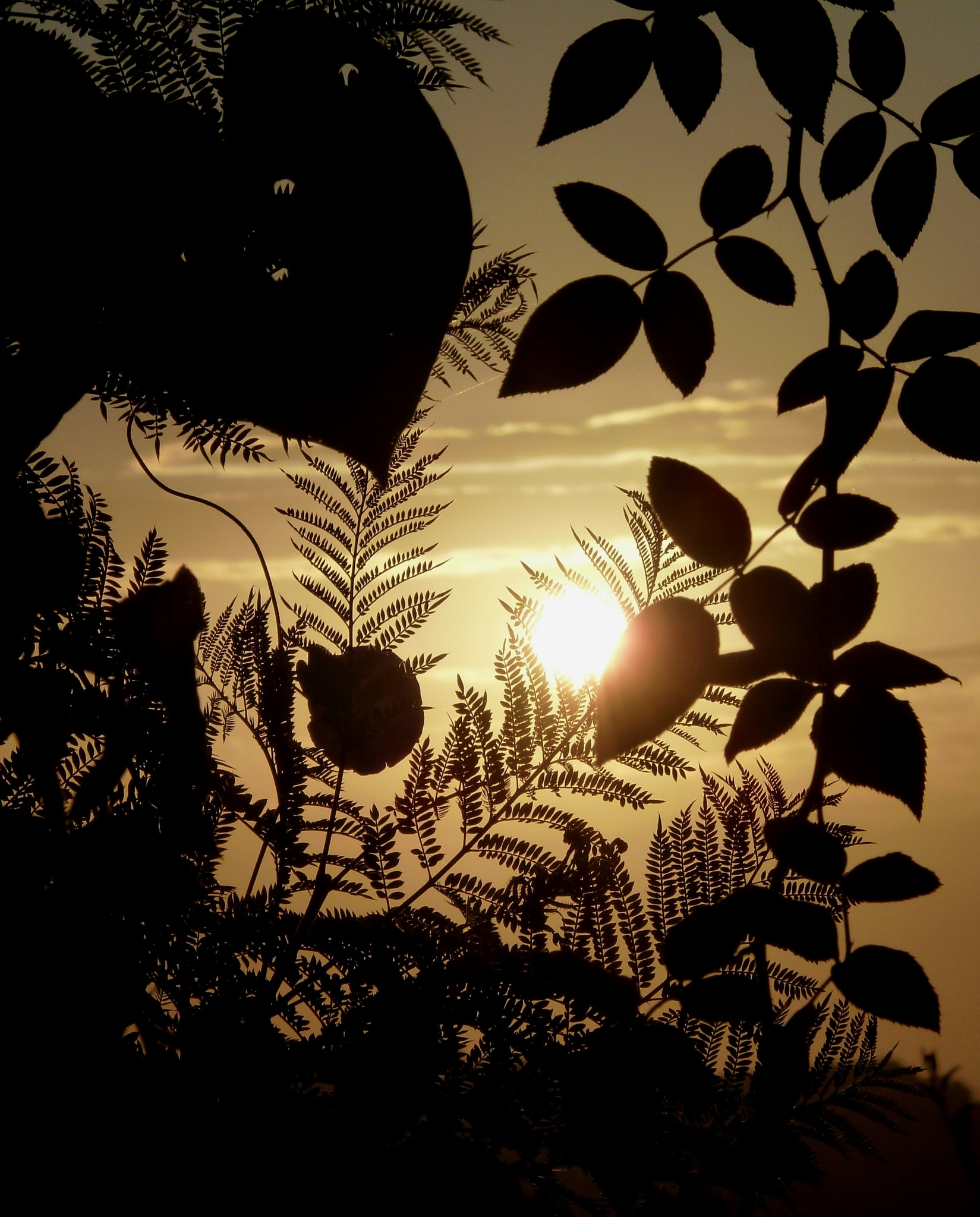 Leaf silhouettes and the rising sun. by Anton Agalbato