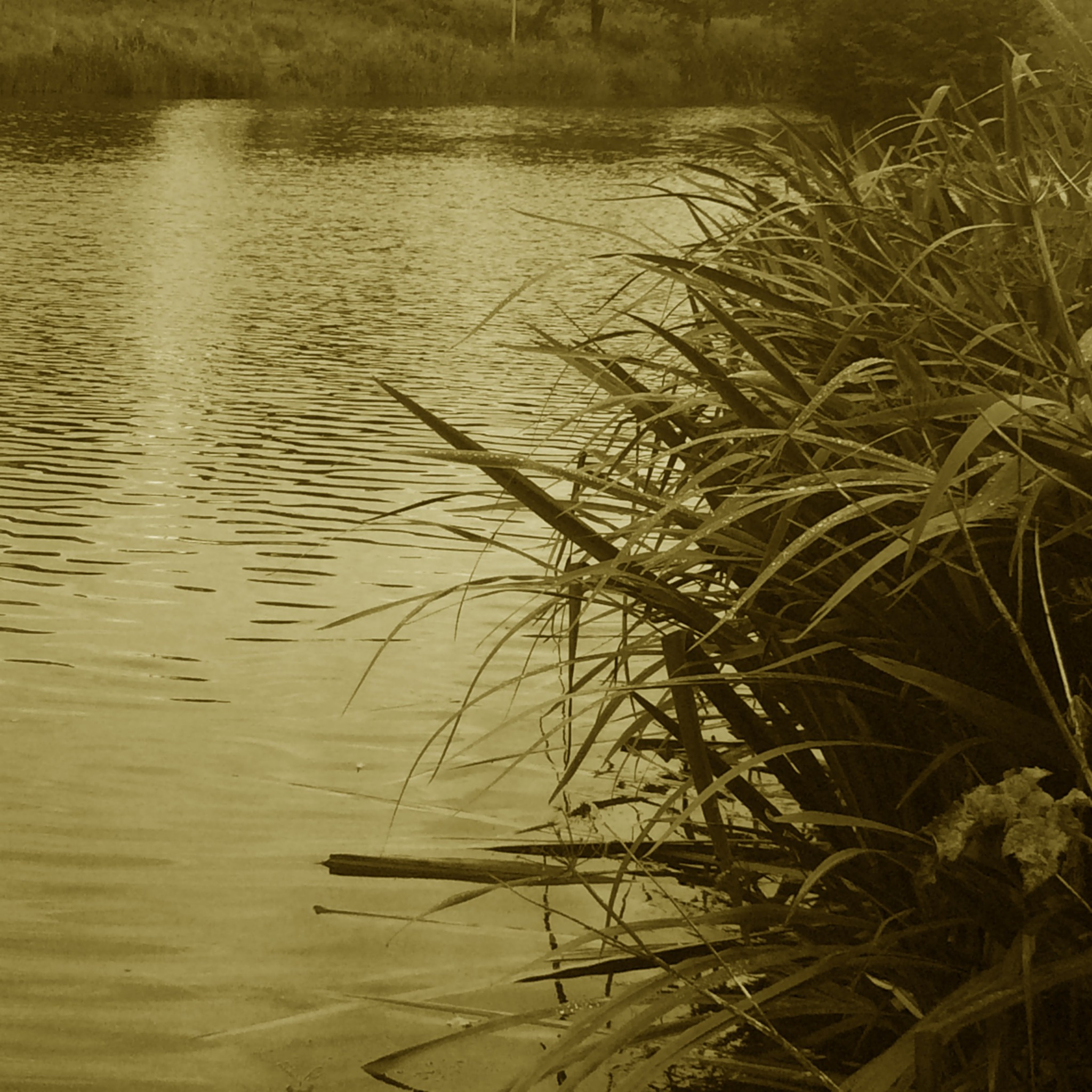 Reeds and Water by Abigail