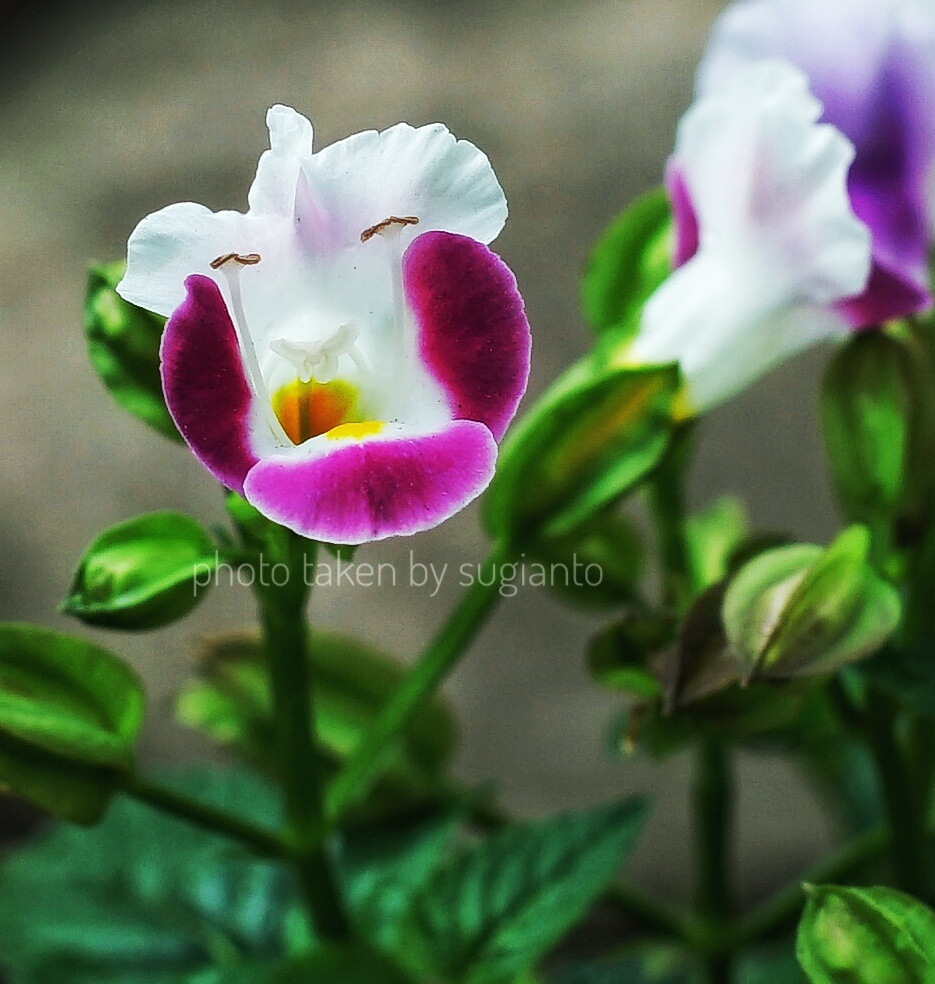 The flower by Sugi Anto