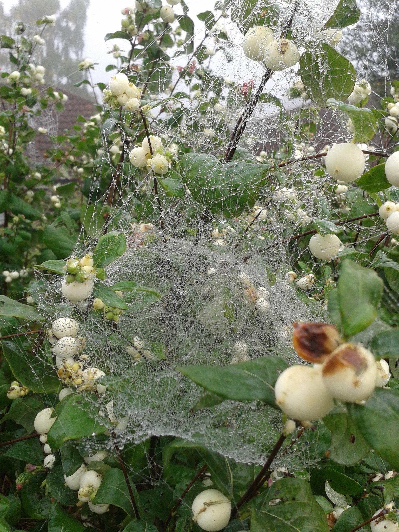 Wet Webs by Peta Rahmatalla