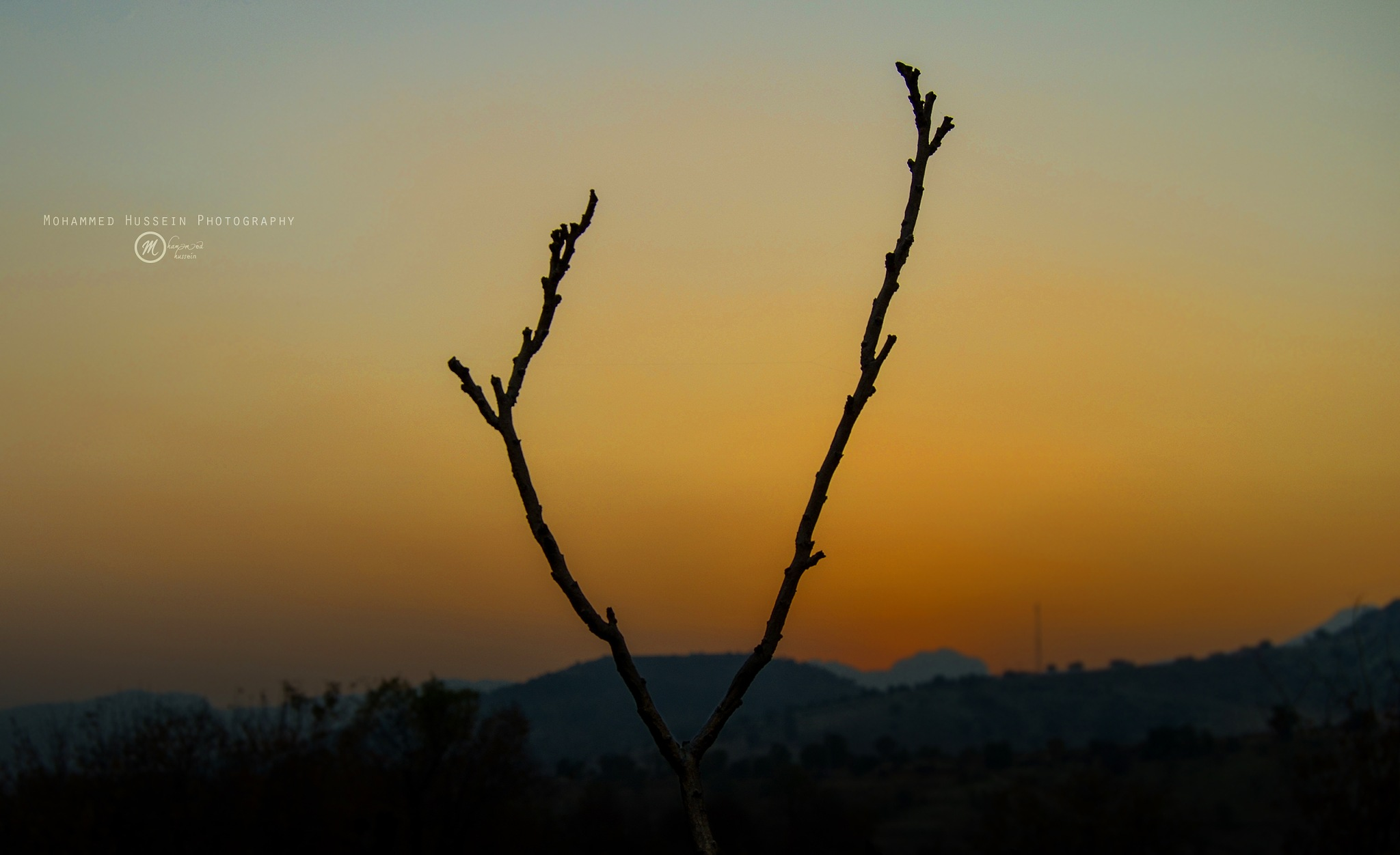 The Branches and the sunset by Mohammed Hussein Photography