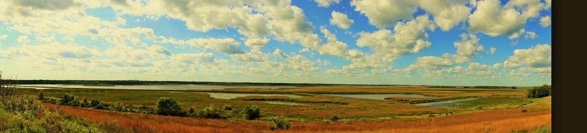 Marsh by Trisha Spettel