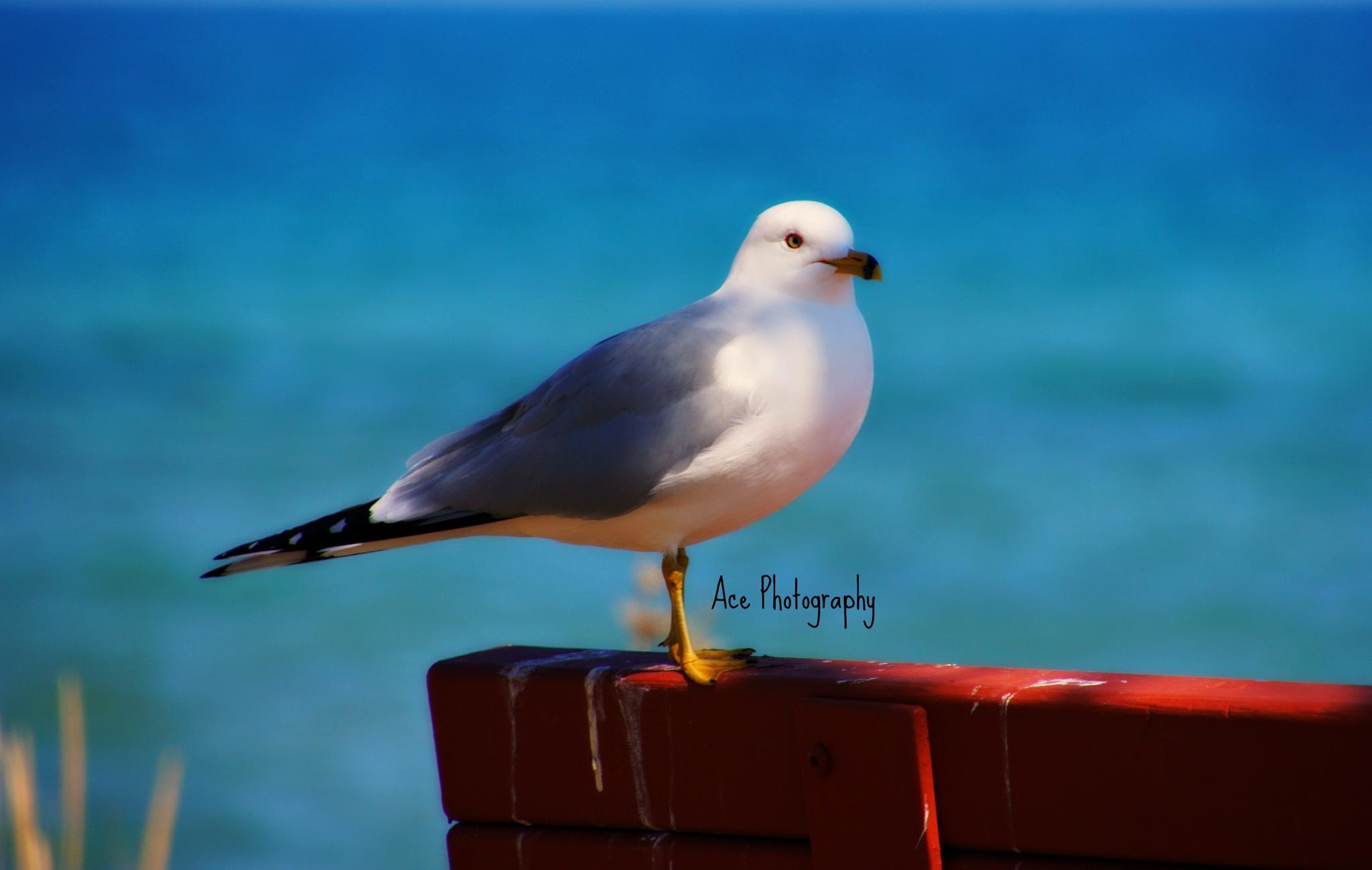 Bird by Trisha Spettel