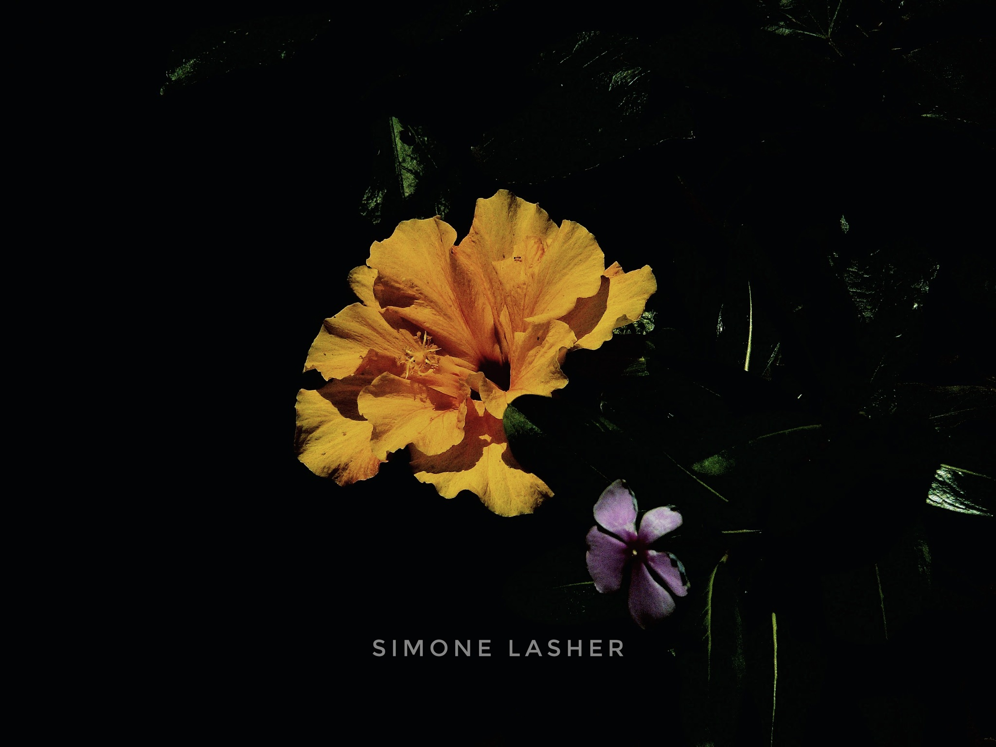 Untitled by Simone Lasher