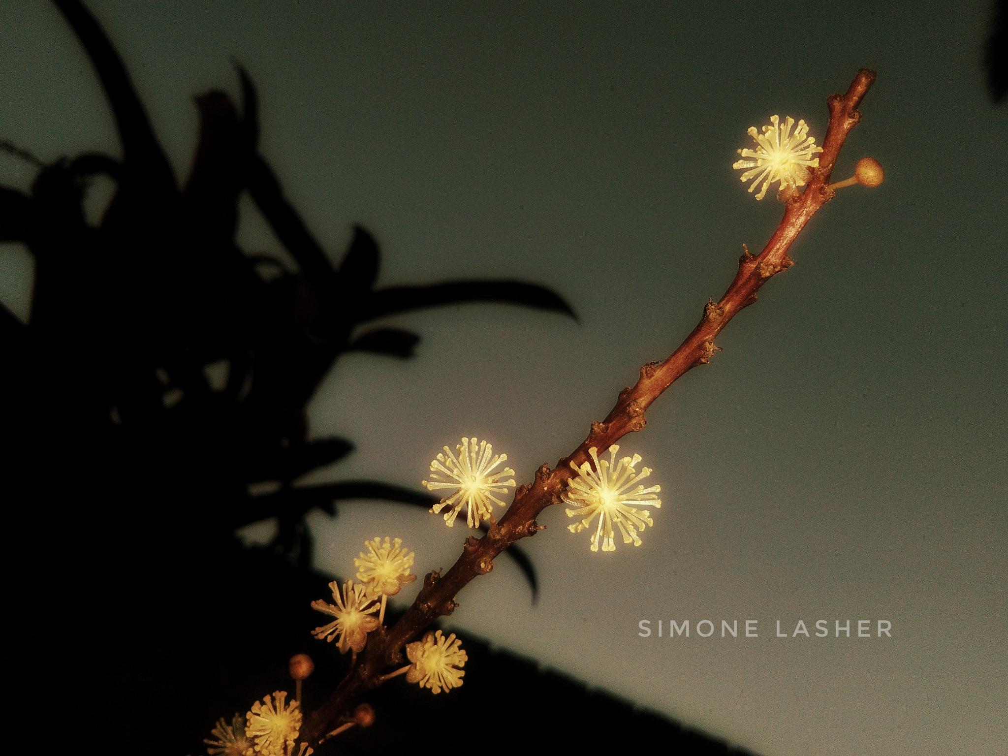 glow by Simone Lasher
