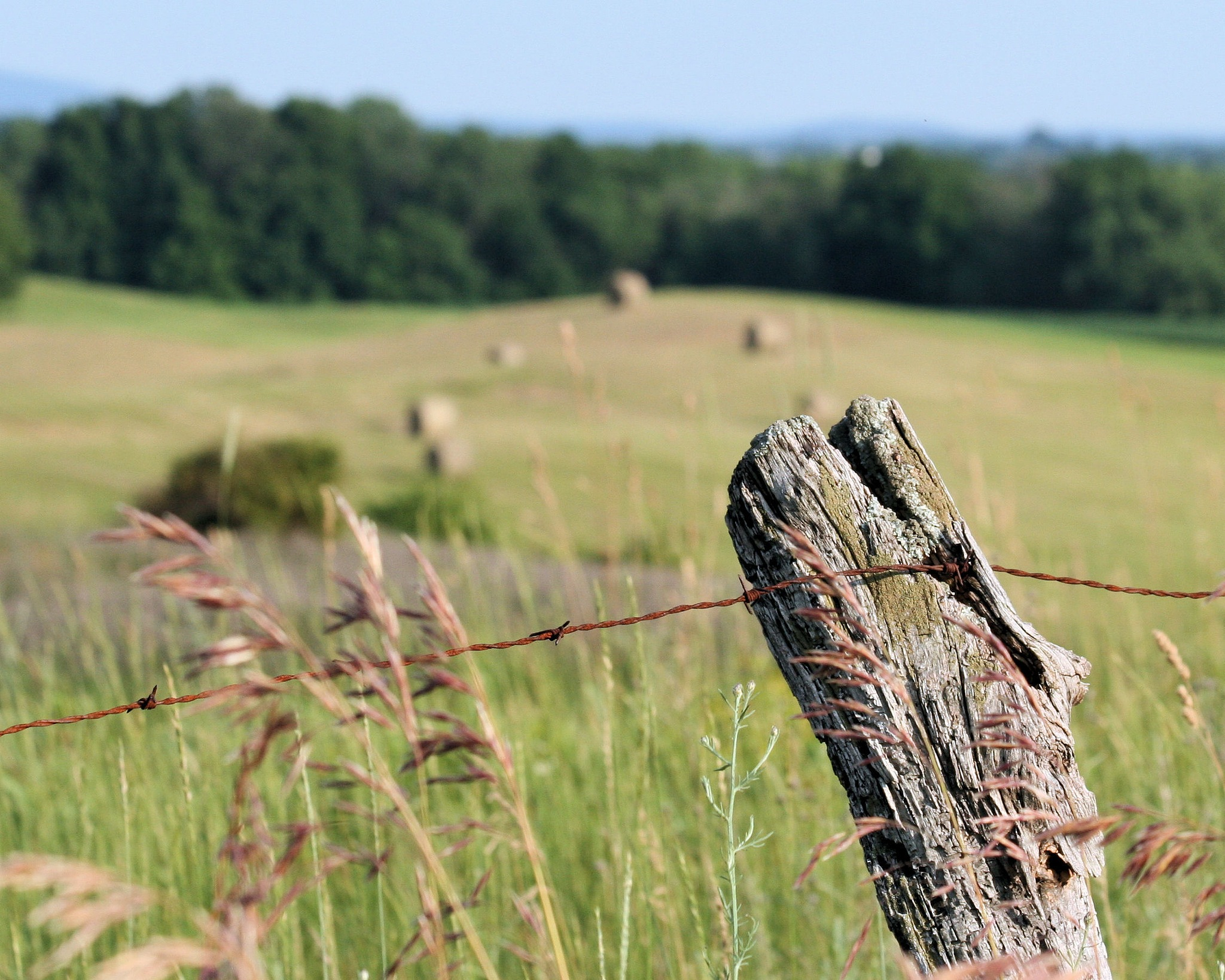 Fence post by acwhite