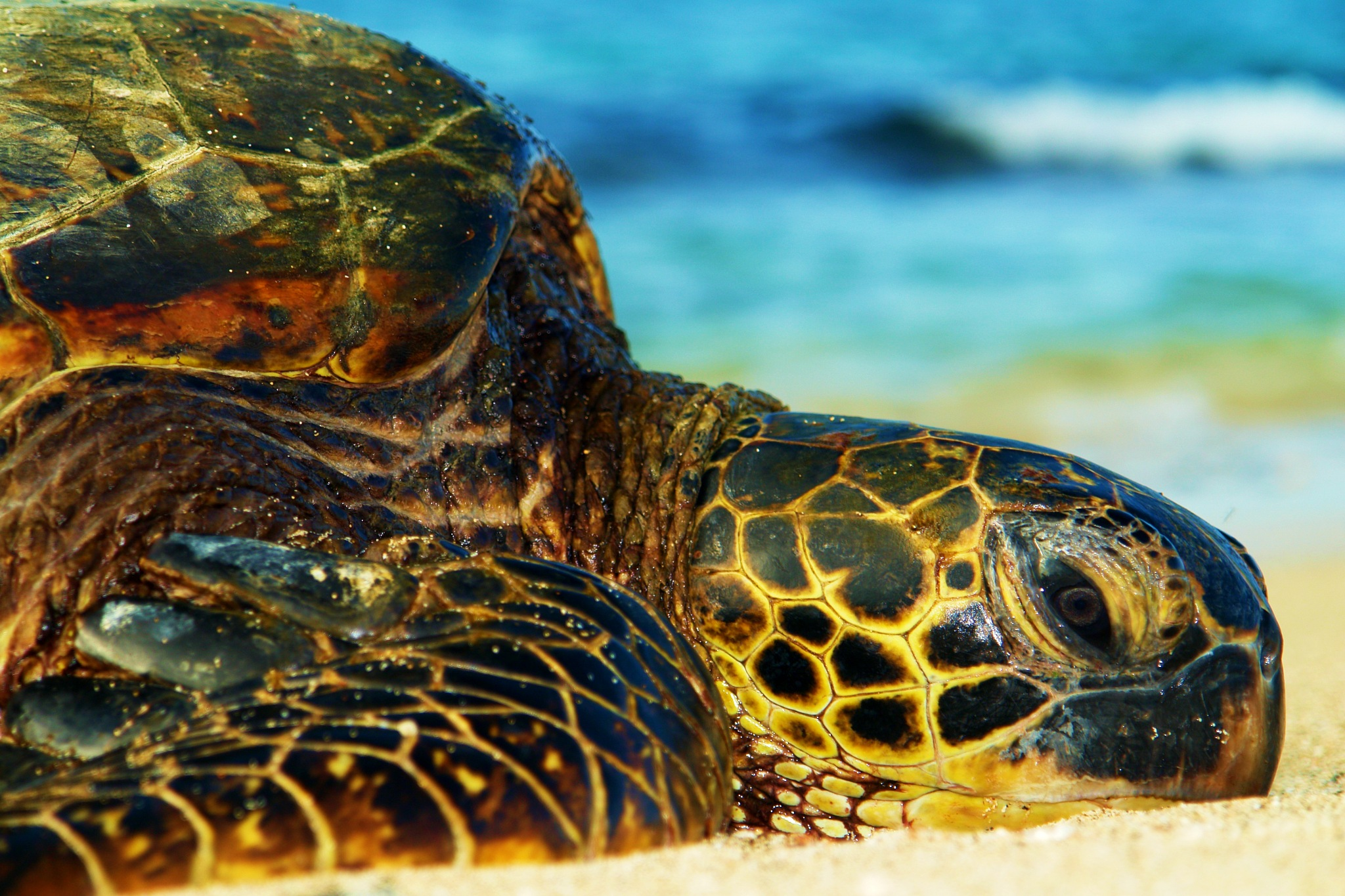 Turtle on the beach by Miloliidrifter