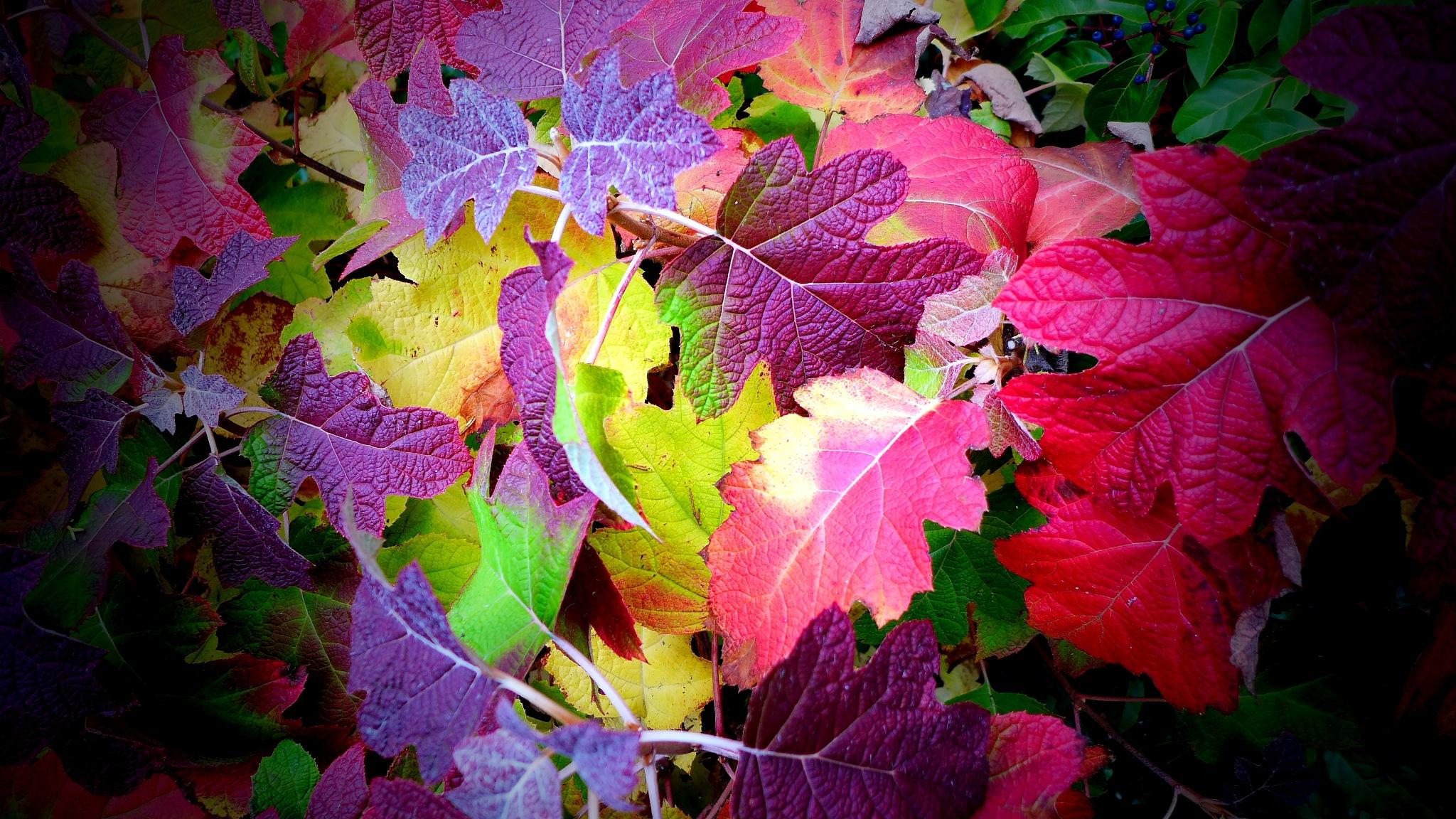 Roadside, Maple Leaves British Columbia by Miloliidrifter