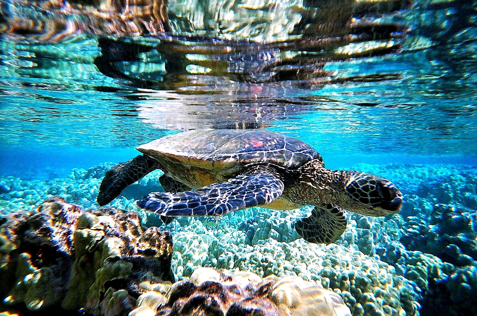 My morning swim by Miloliidrifter