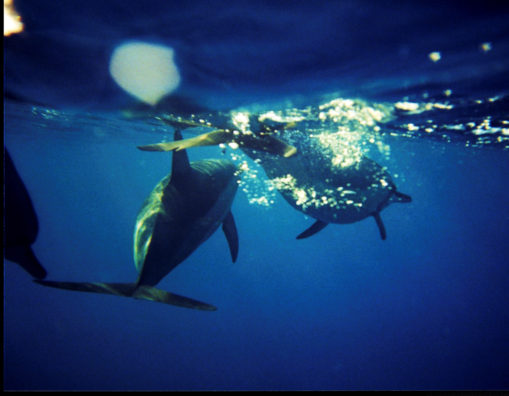 Morning swim with my friends, iif its not bottlenose dolphins who know me its turtles, sometimes I s by Miloliidrifter