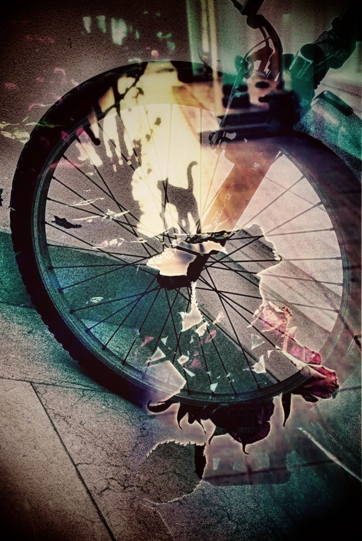 Wheel and Cat by AyseA