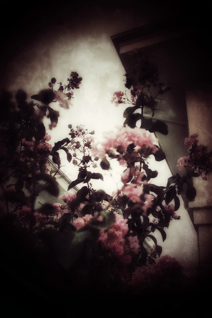 Flowers Through Darkness by AyseA