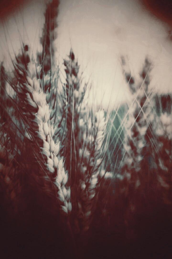 Spikes  by AyseA