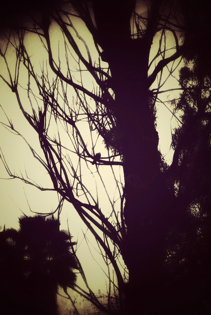 Tree in the Evening  by AyseA