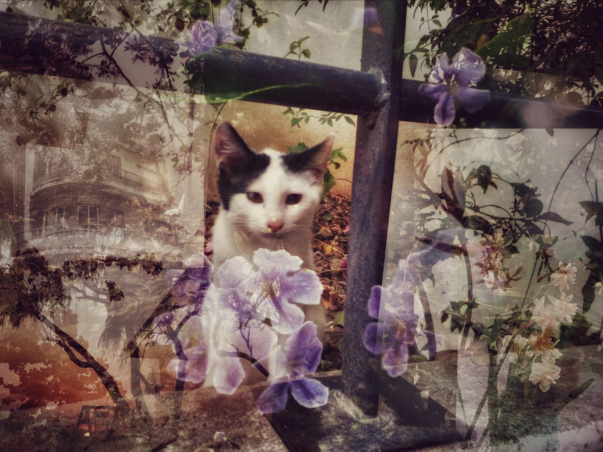 Cat by AyseA